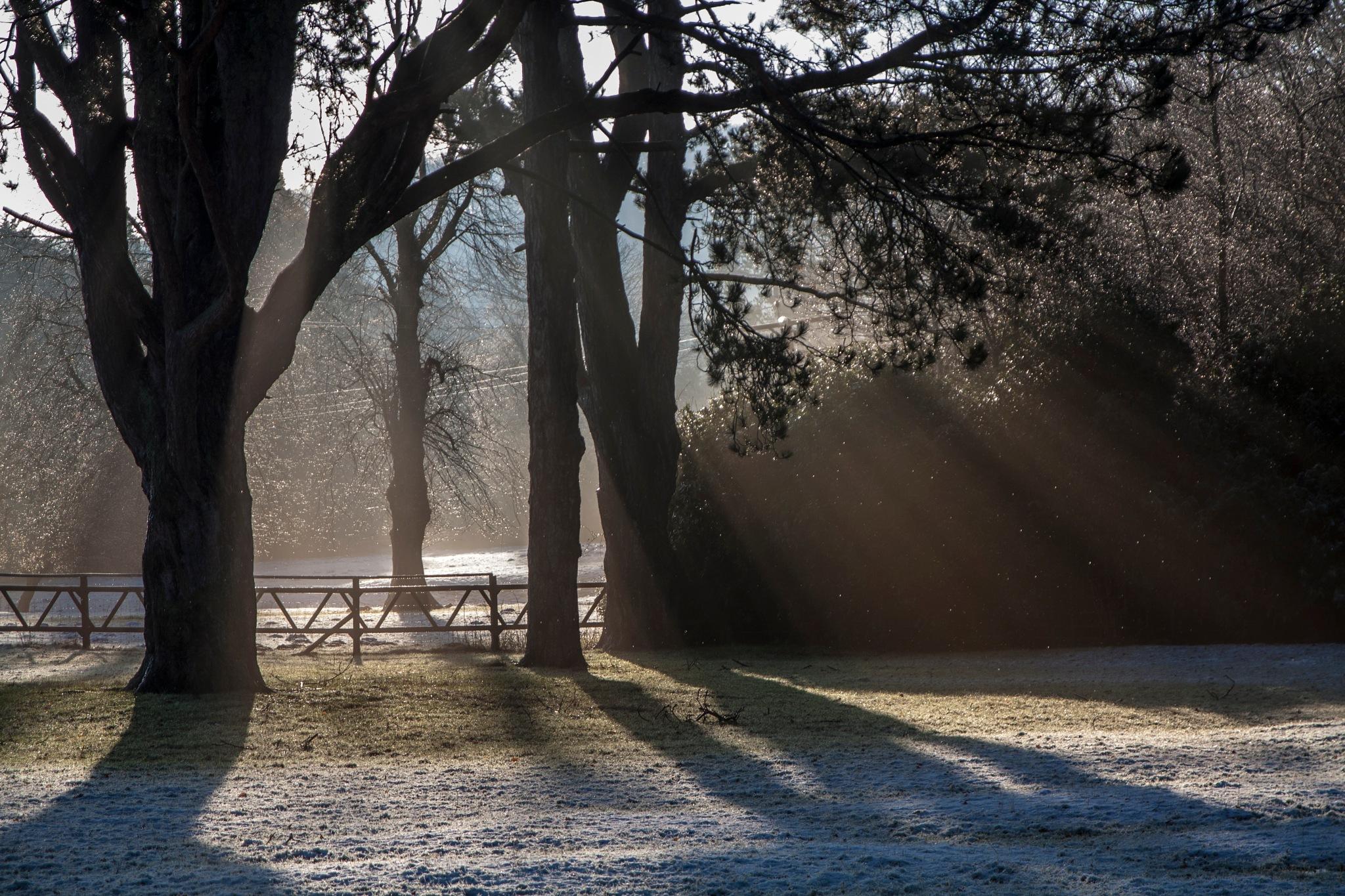 Sunbeams through trees onto Frosty Ground by martin.davis.5243817