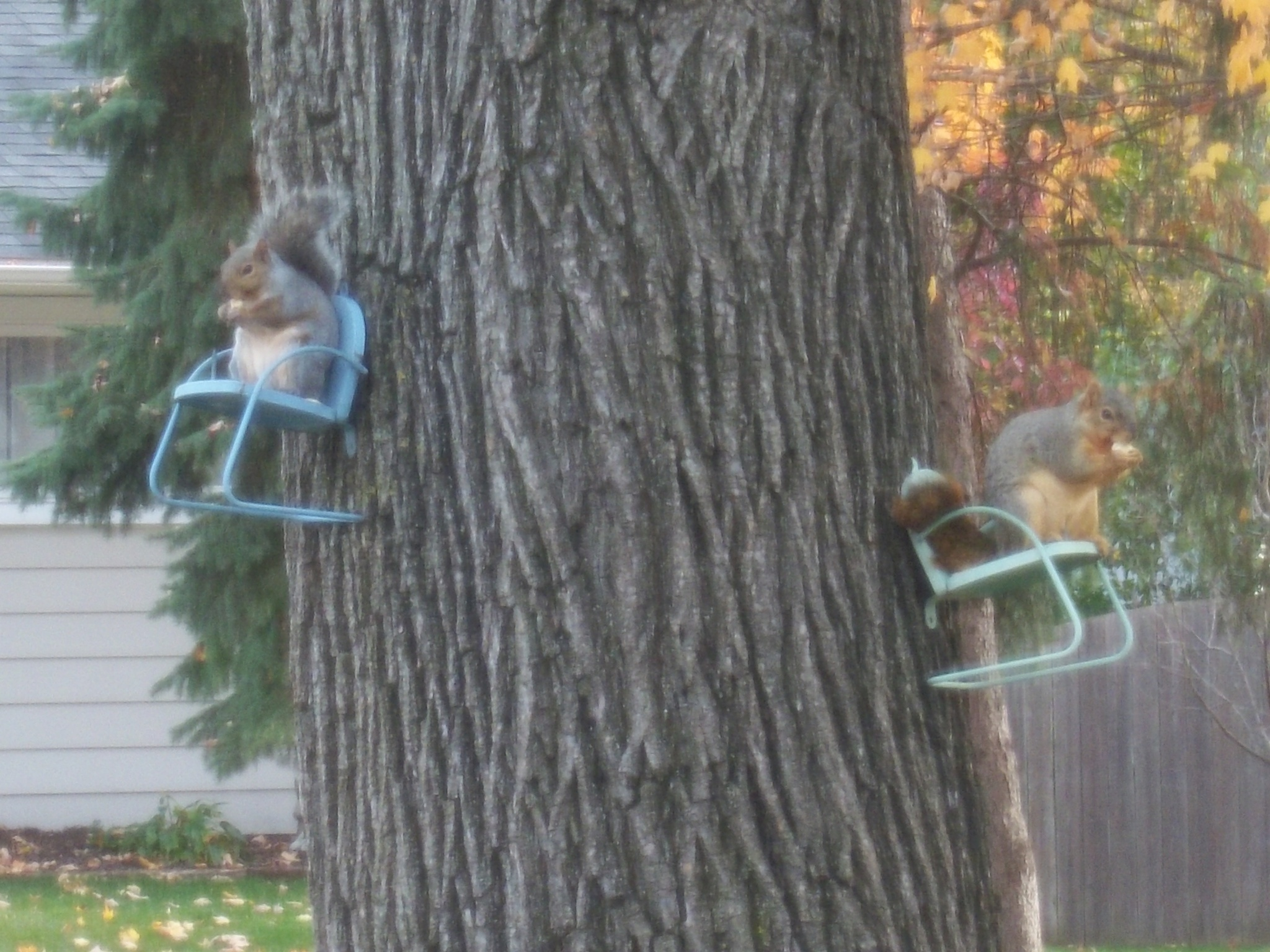 Lunchtime Squirrels  by Earl Dean