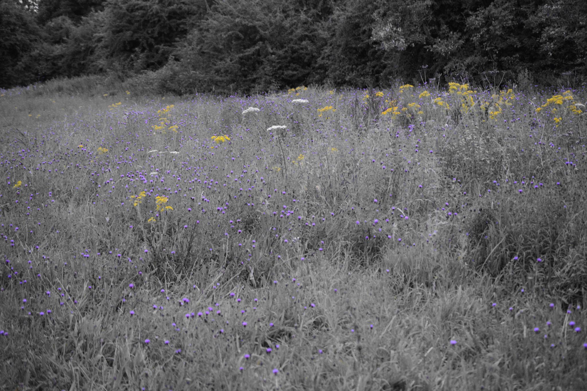 Sea of Yellow & Purple by adam.west.79677