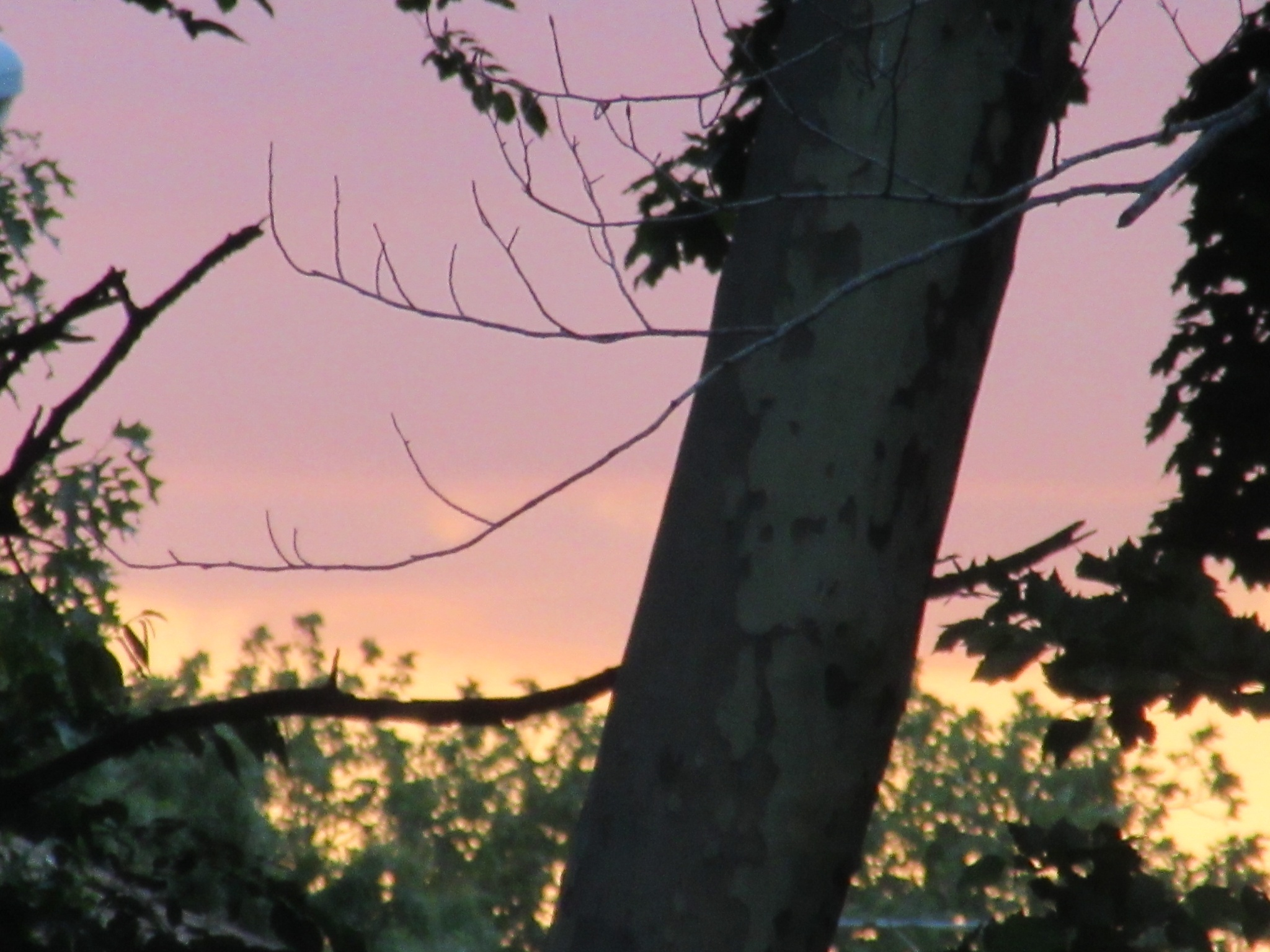 Photo in Rural #sunset #tree #sky