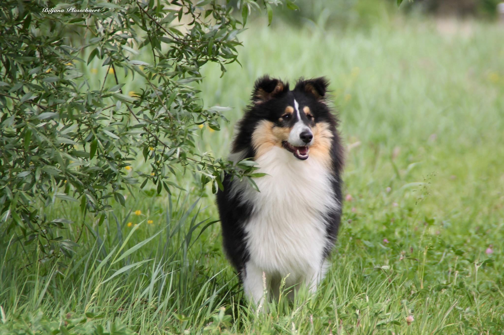 Photo in Animal #dog #nature #spring