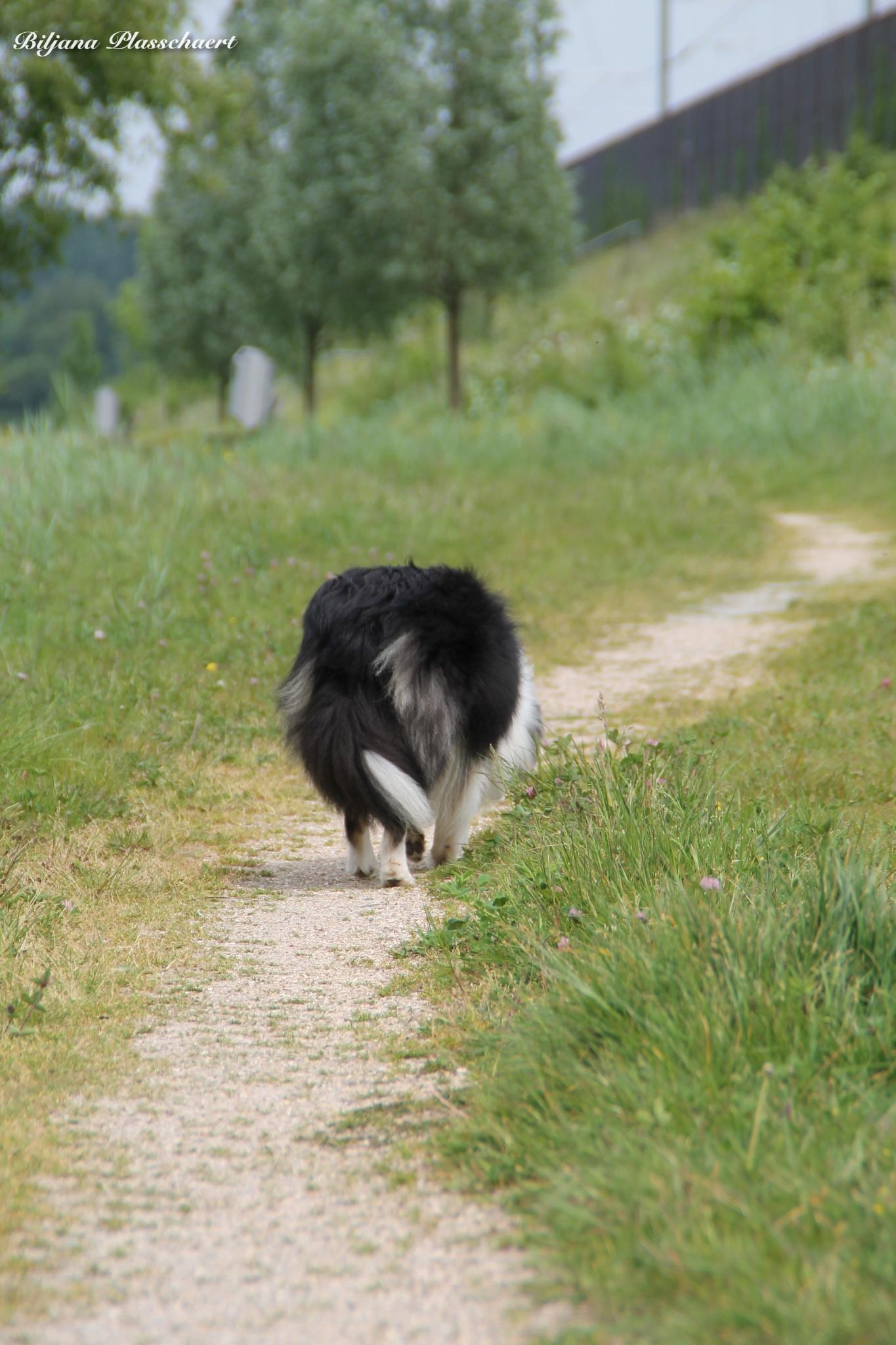 Photo in Animal #dog #walking #spring #nature