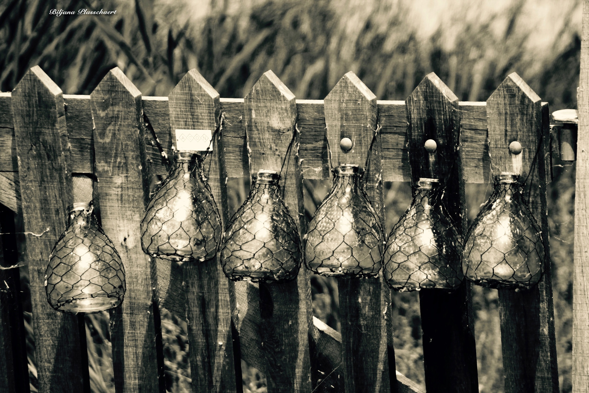 Wasp catchers by biljana.plasschaert