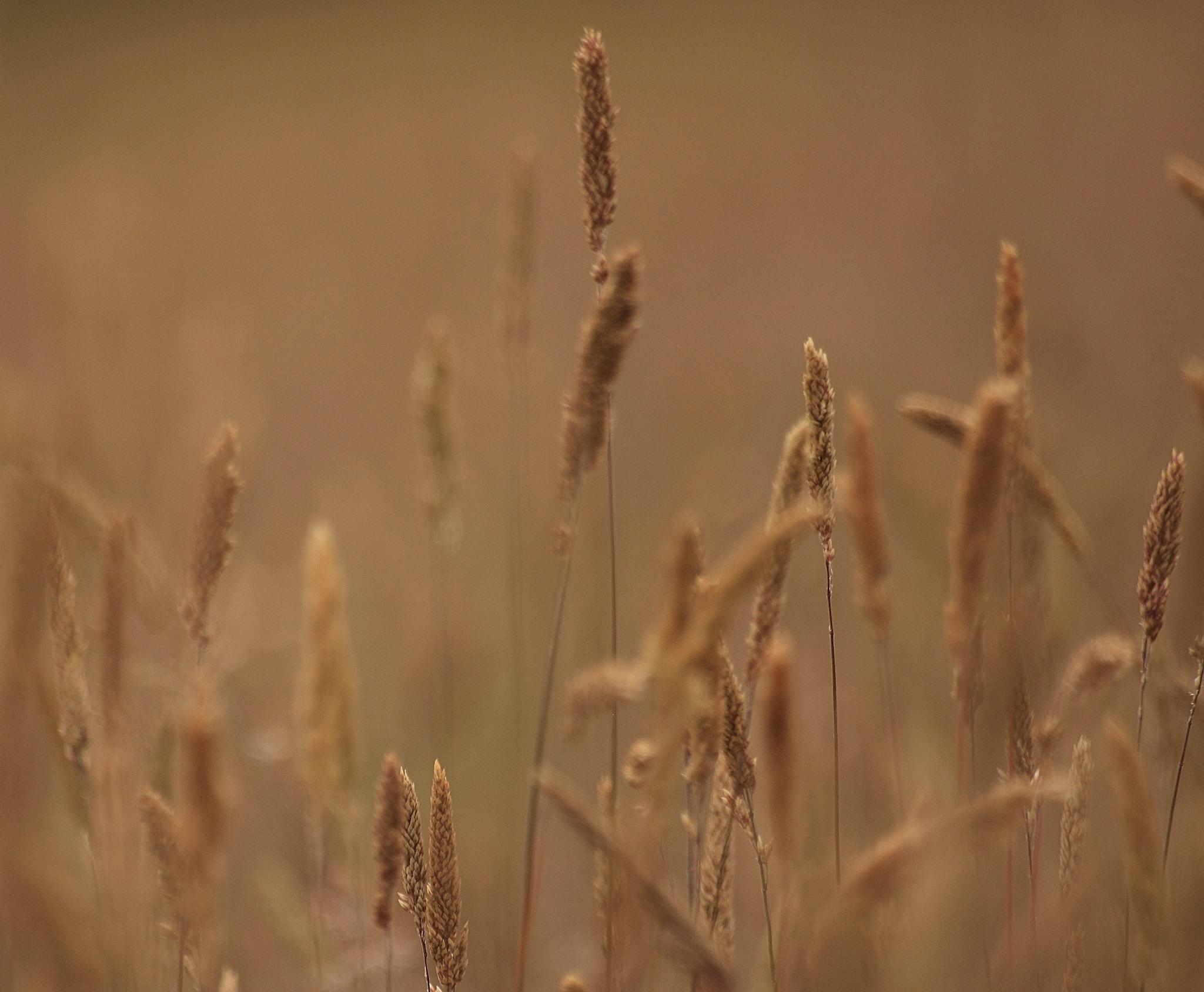 just grass... by marion.vanriet