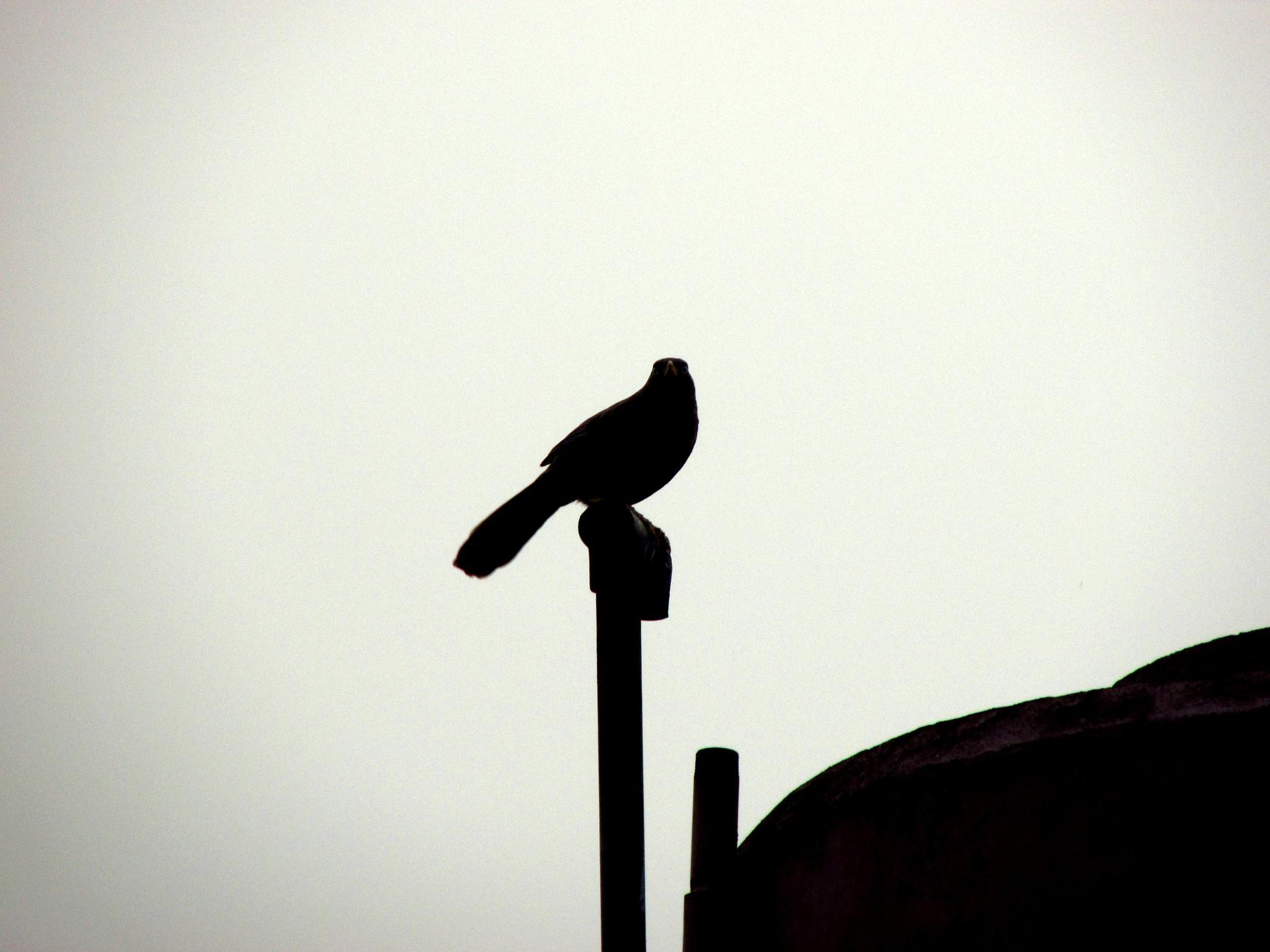 bird at dawn by kuntal09jack