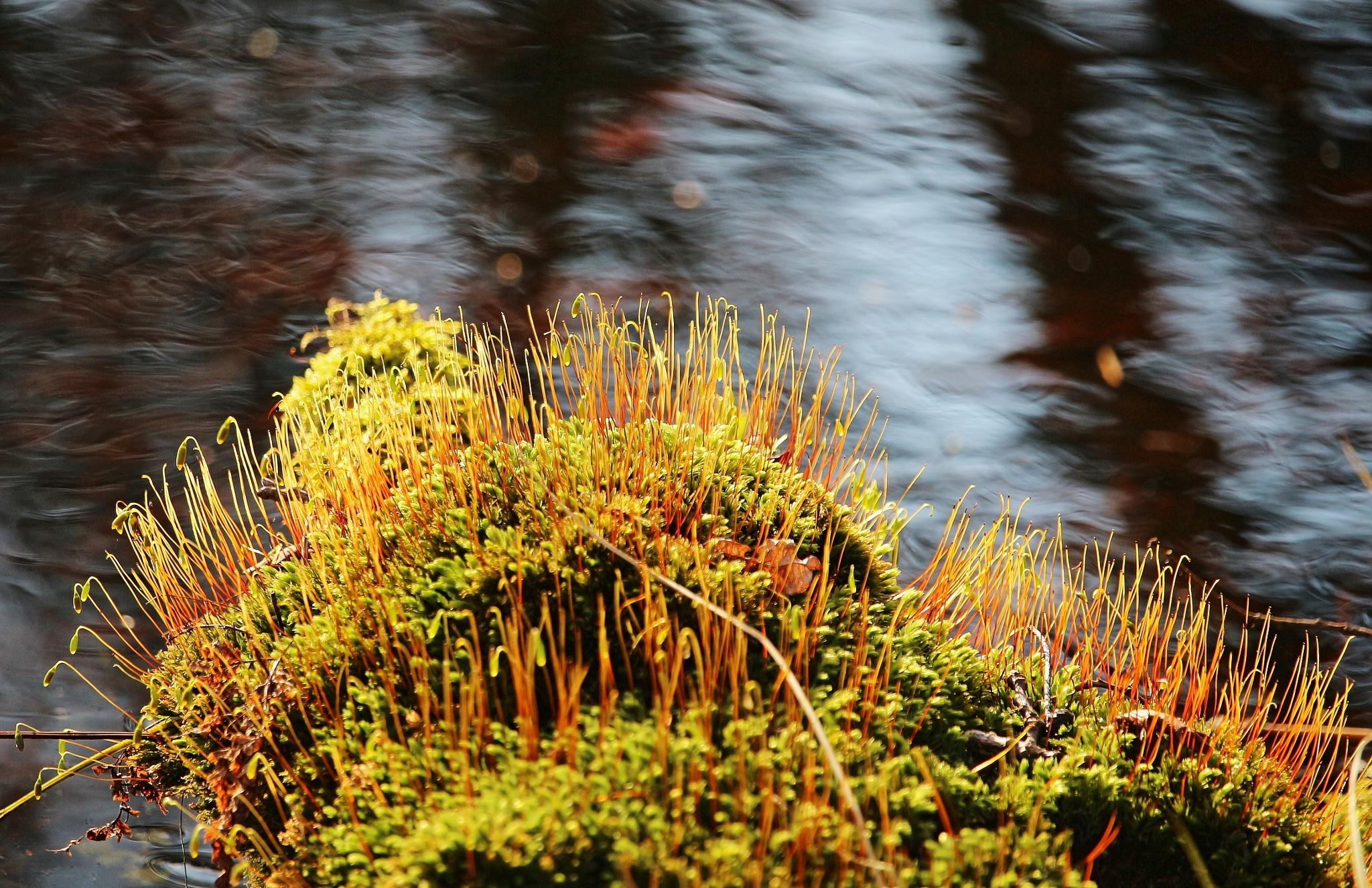 't zonnetje scheen zo mooi op het mos by Evie Tinnevelt