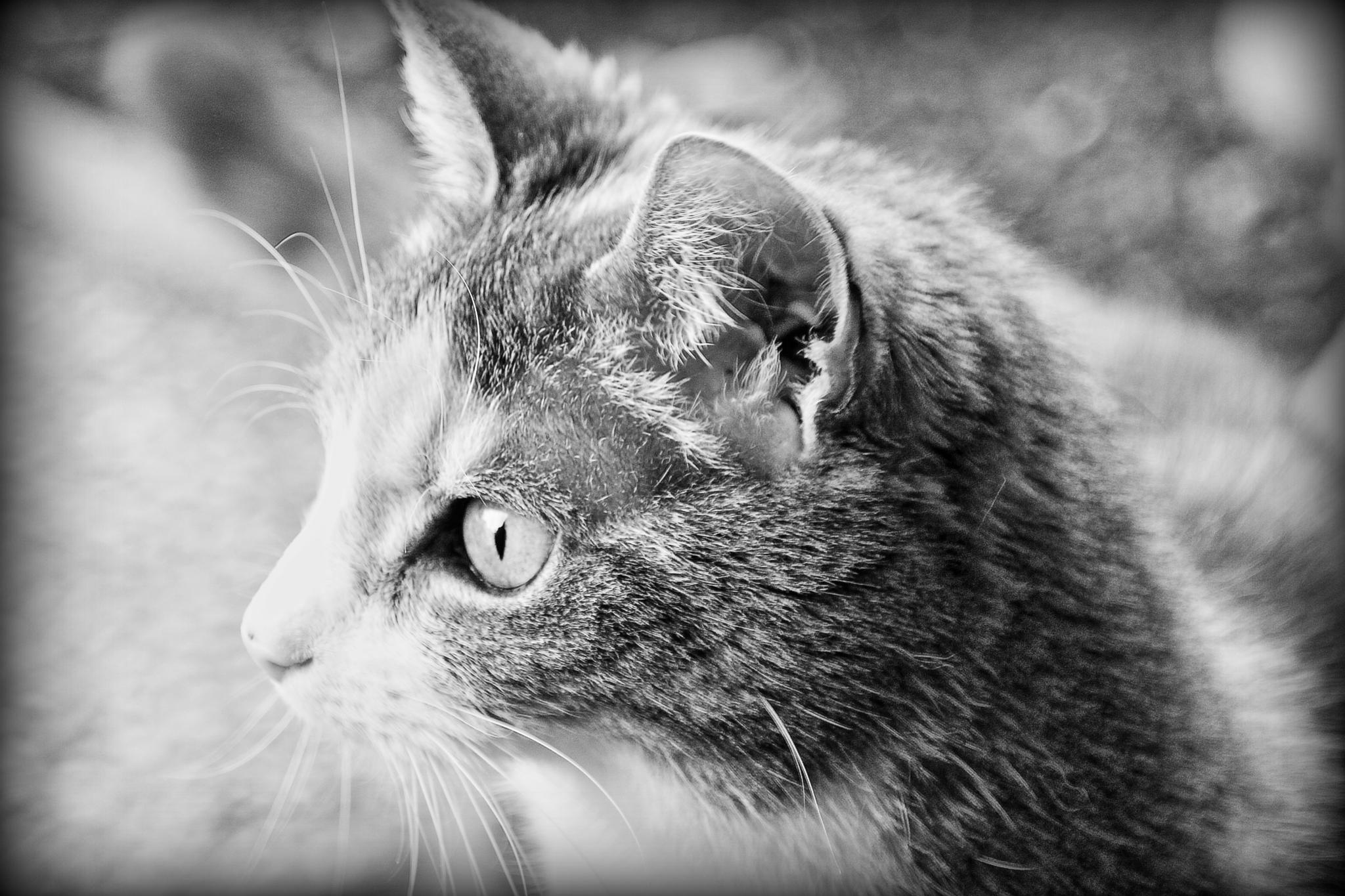 my little cat Twinkel by Evie Tinnevelt