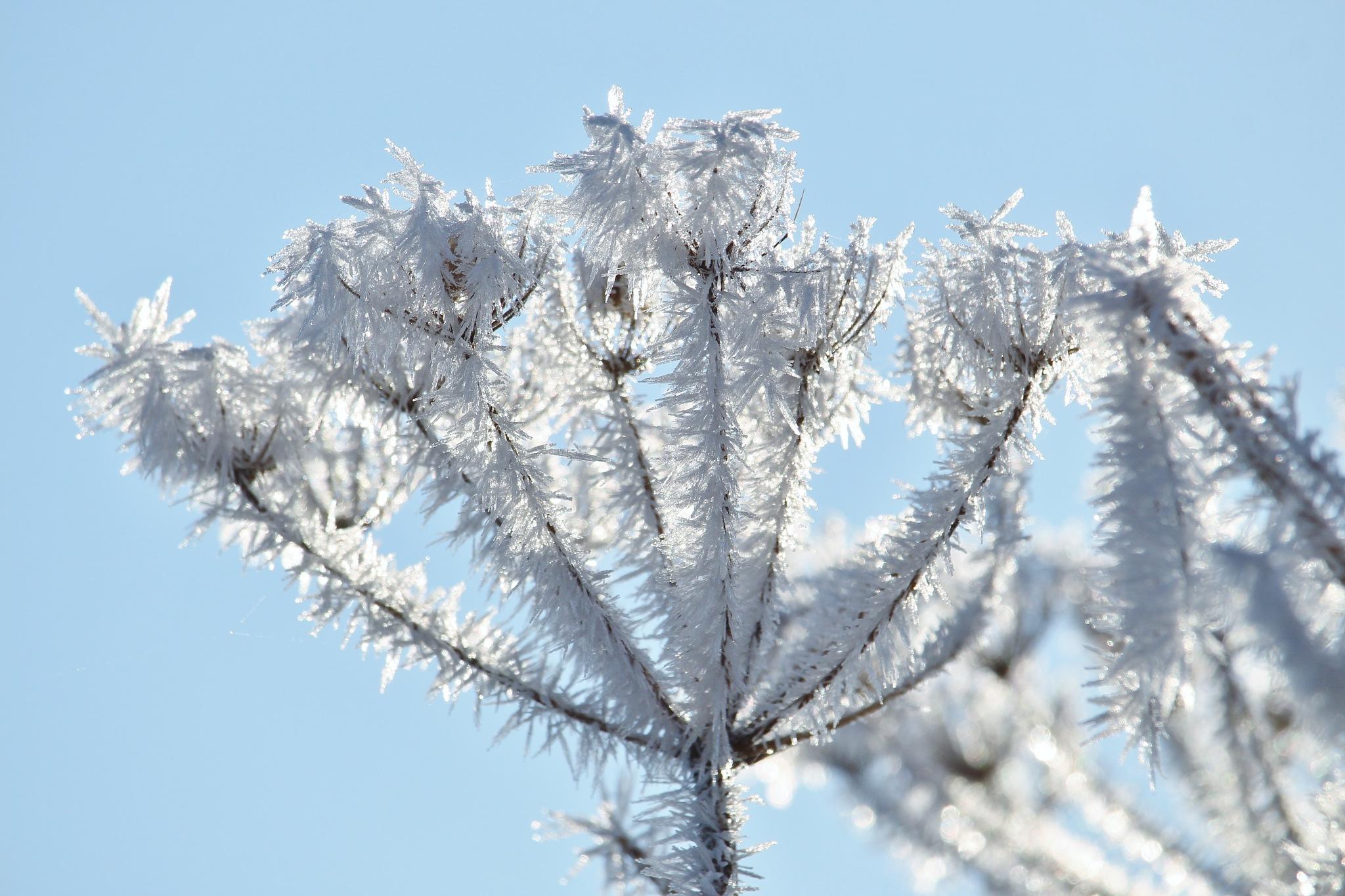 Winter by Evie Tinnevelt