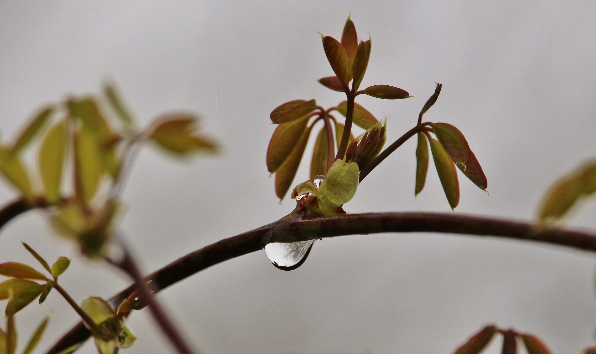 A rainy day by Evie Tinnevelt