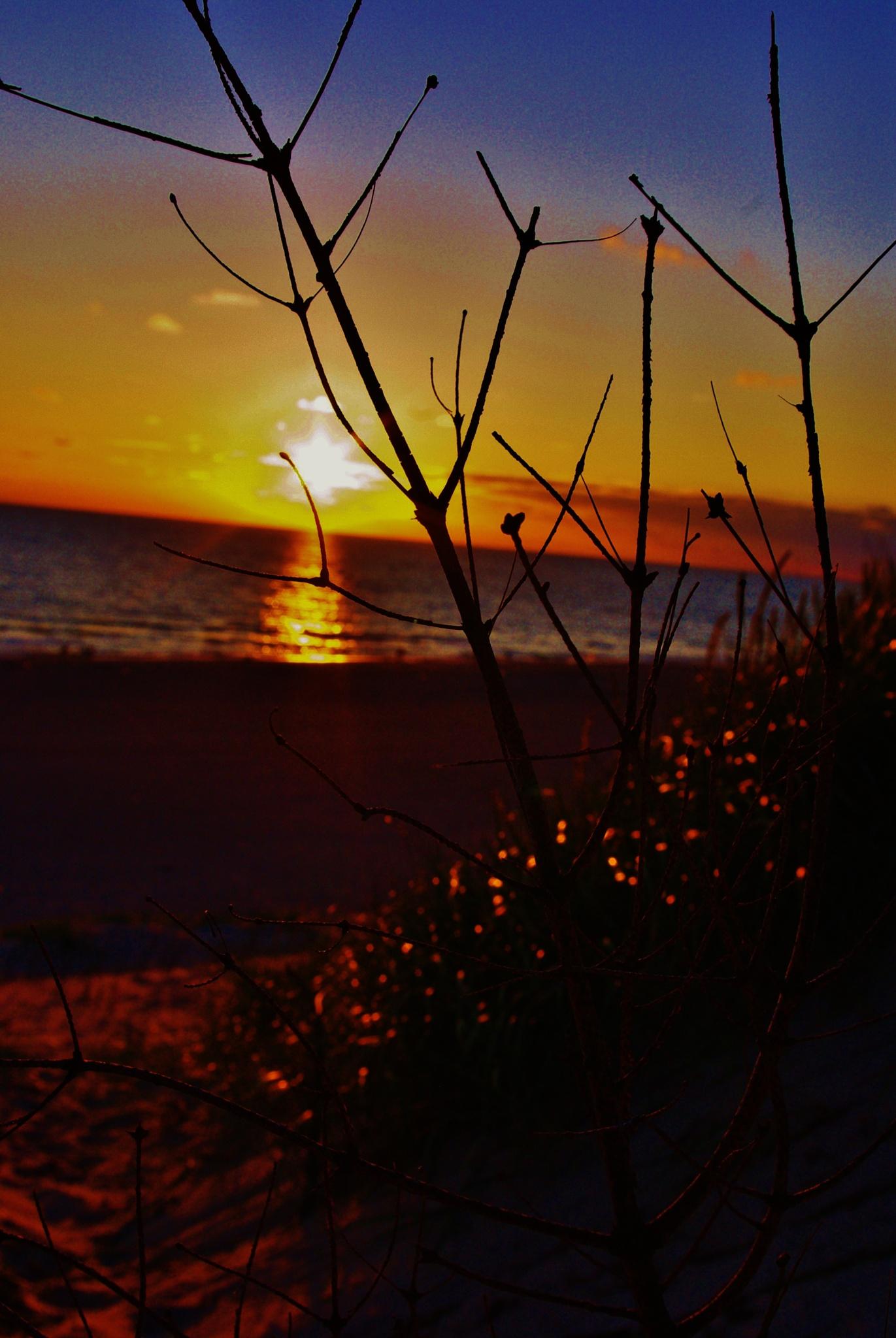 sunset vesterhavet by papp