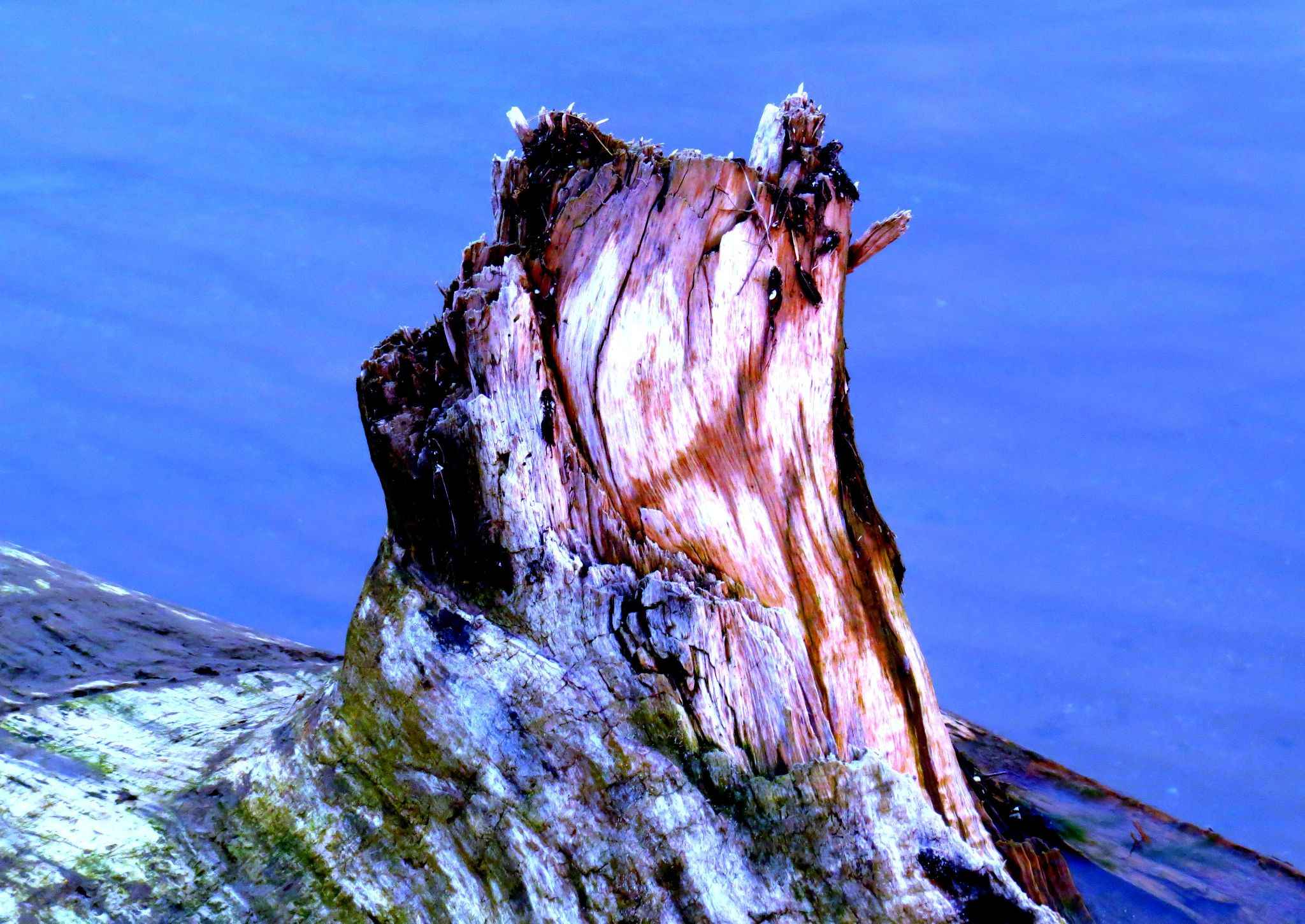 Psychedelic driftwood by pennieawhite