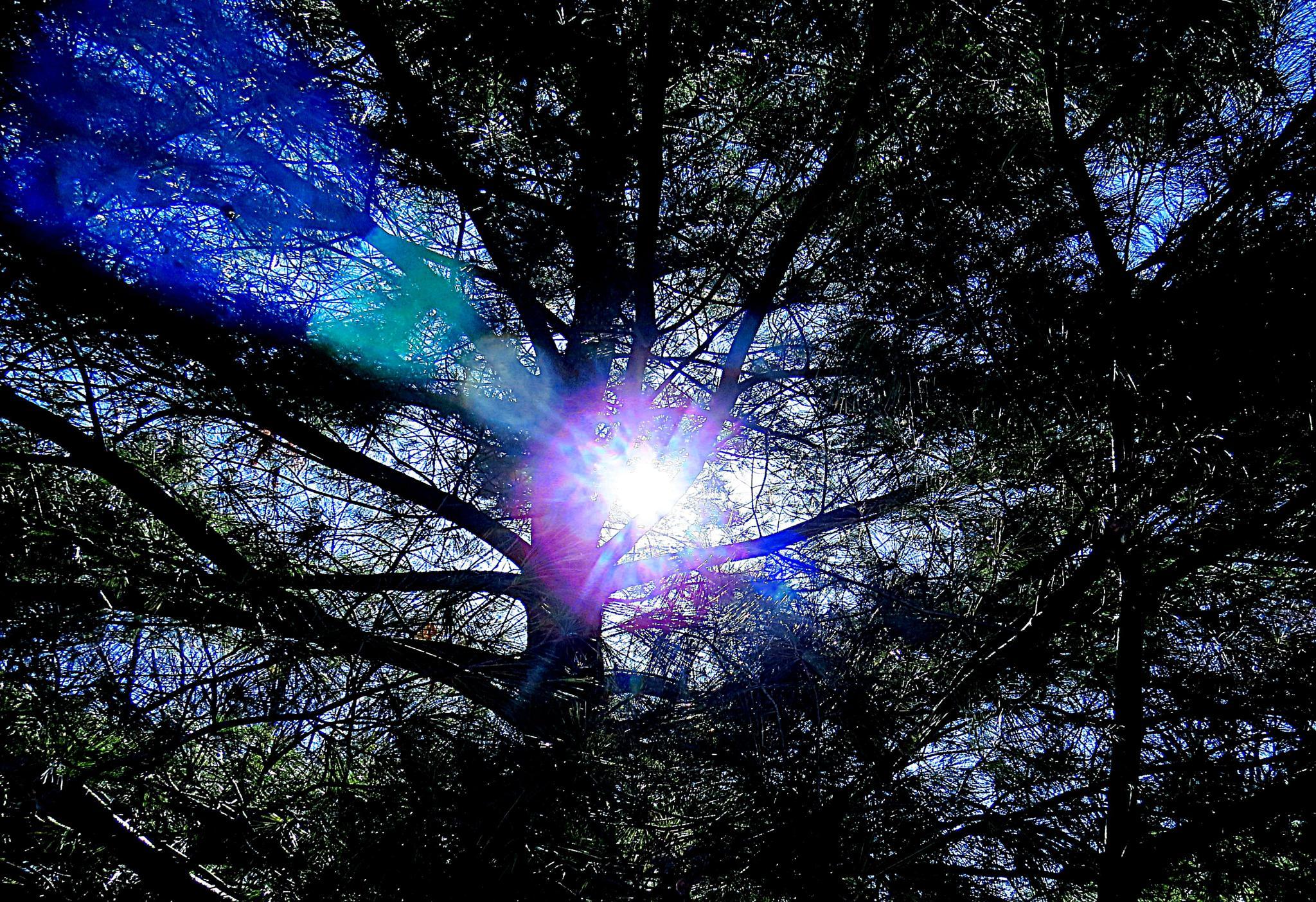 Sun flare by pennieawhite