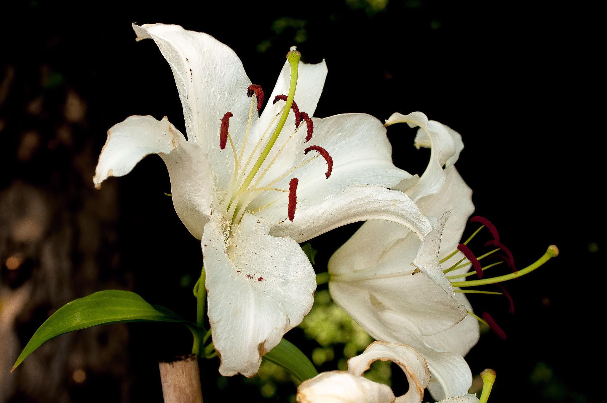 White Flower by steven.malecki.52