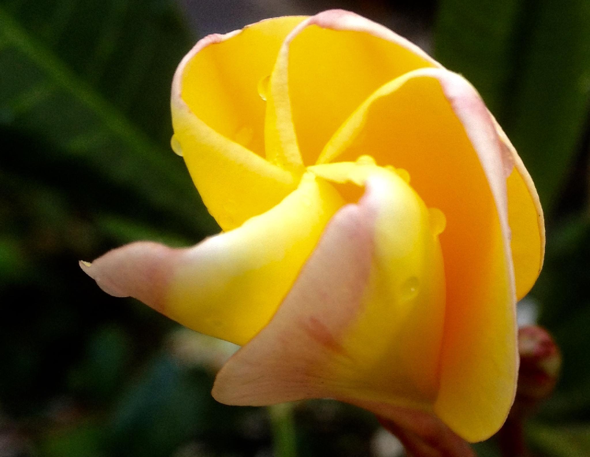 Waiting To Bloom by dorothy.keeseecherkas