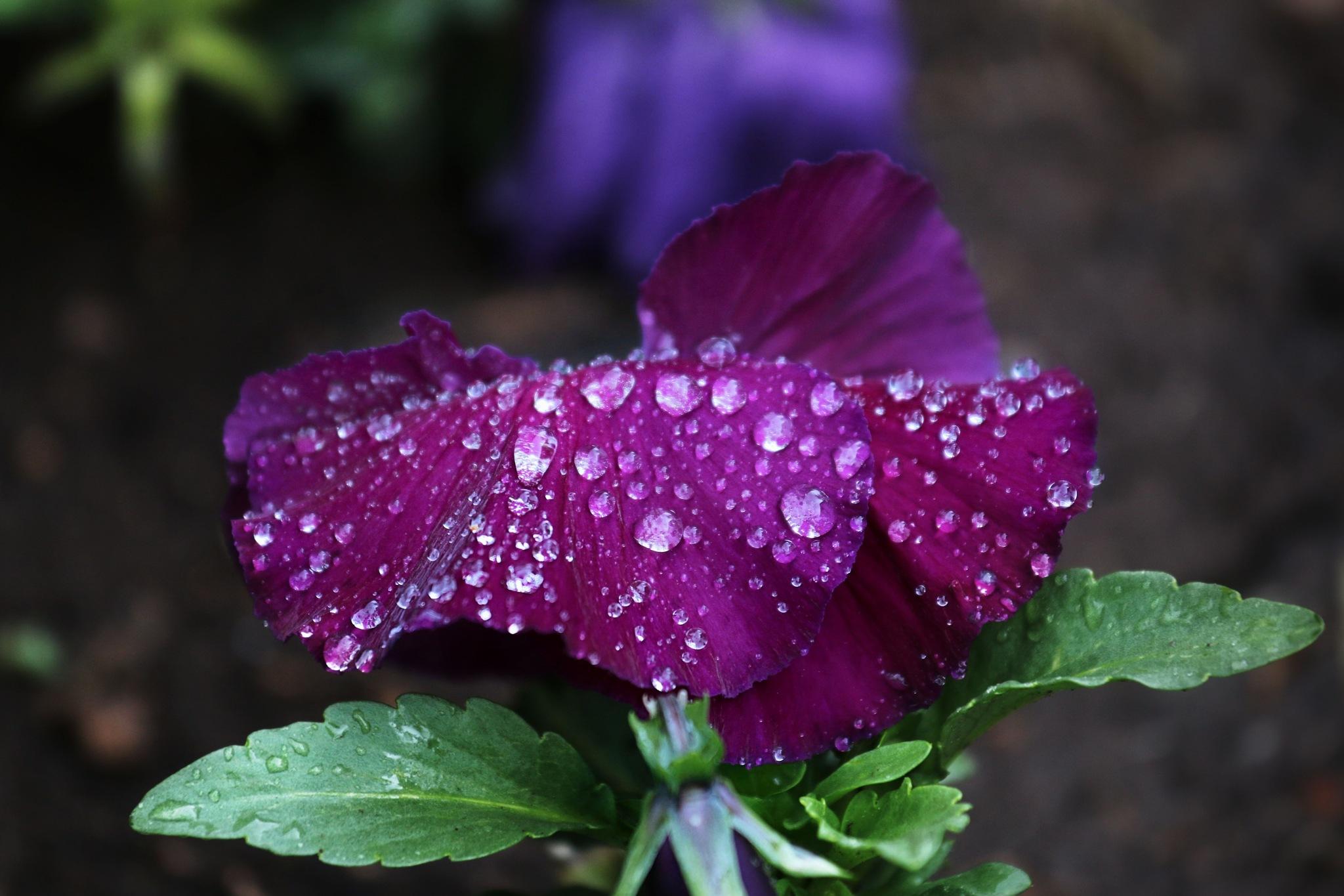 A Wet One by Rodney Tietjen