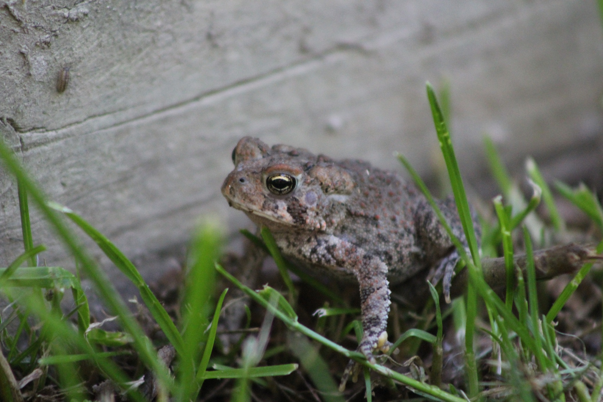 Toad by Chaotic Beauty