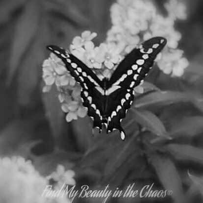 Black & White Butterfly by Chaotic Beauty