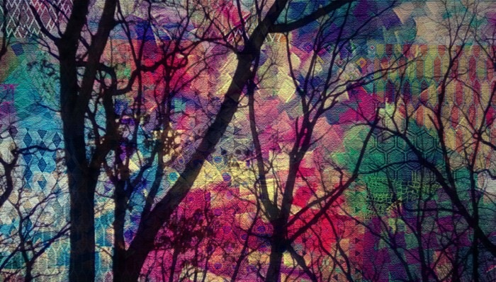 Colorful Beauty by Chaotic Beauty