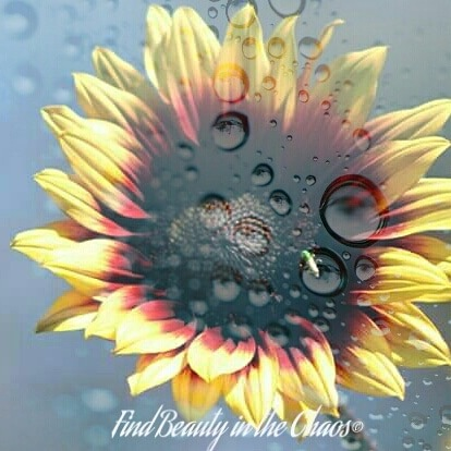 Edited Sunflower by Chaotic Beauty