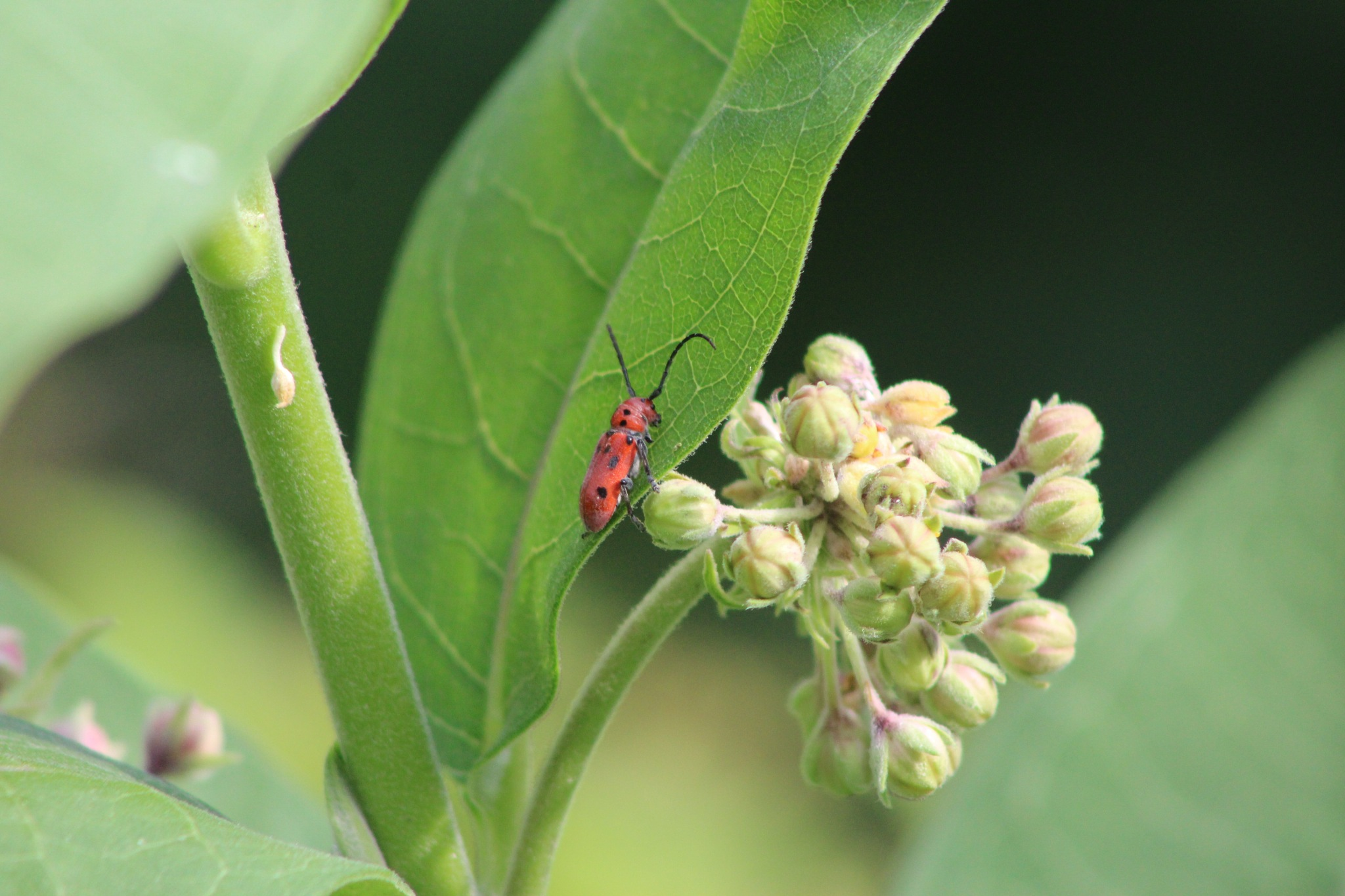Red Beetle by Find My Beauty in the Chaos