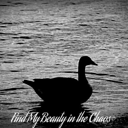 Shadow Goose  by Chaotic Beauty