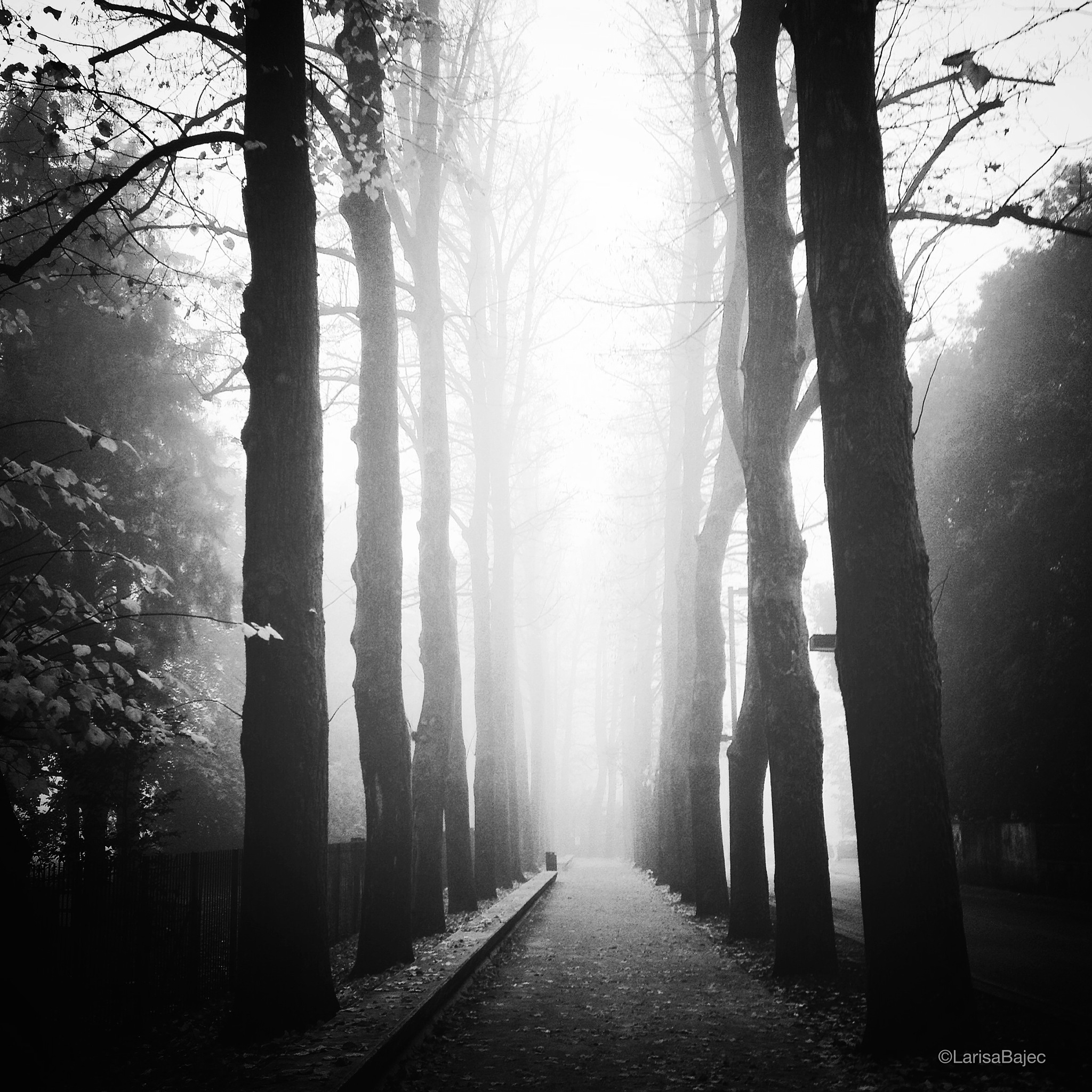 la nebbia by LarisaBajec