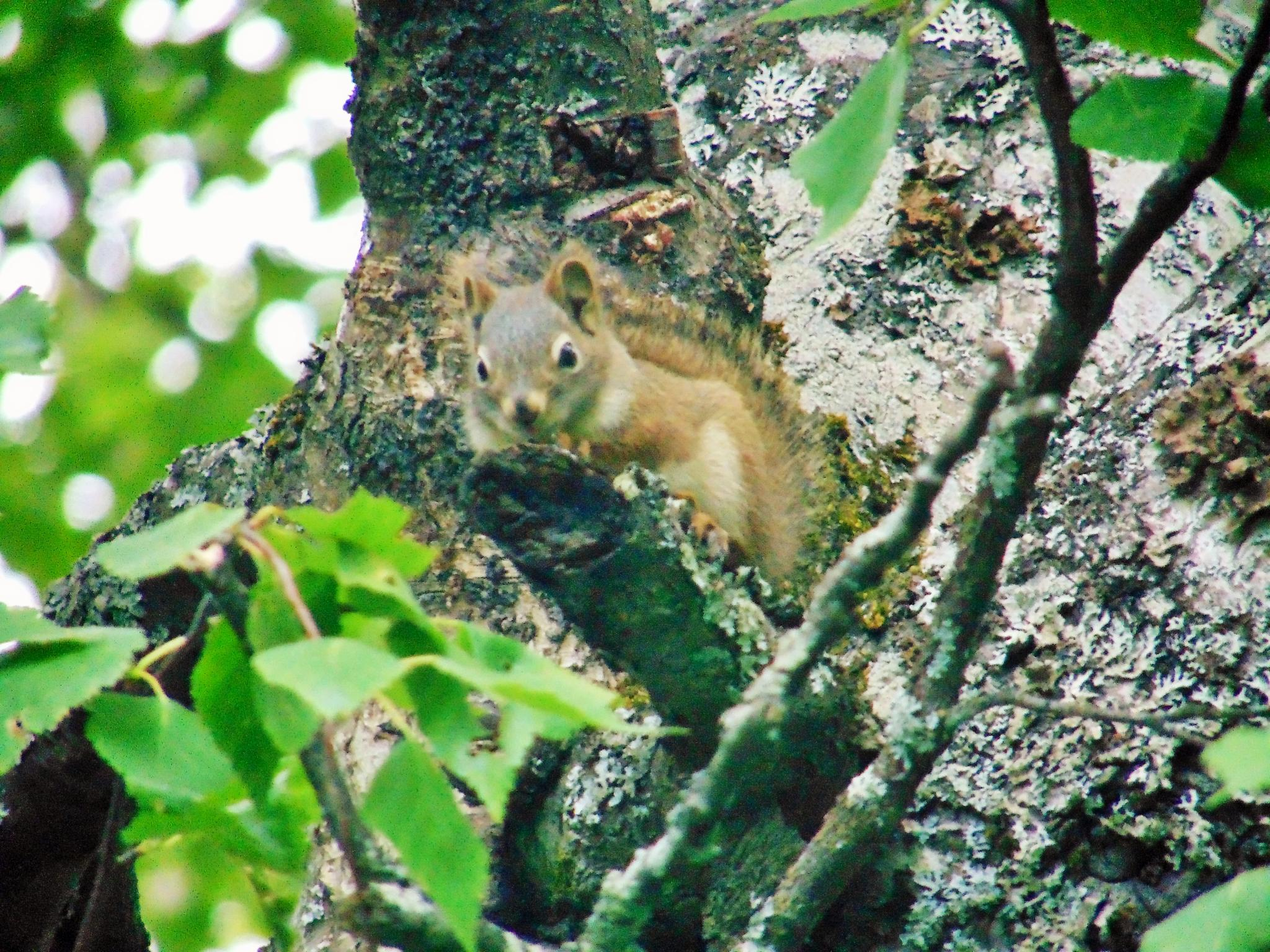 Squirrel by jackie.smallwood1
