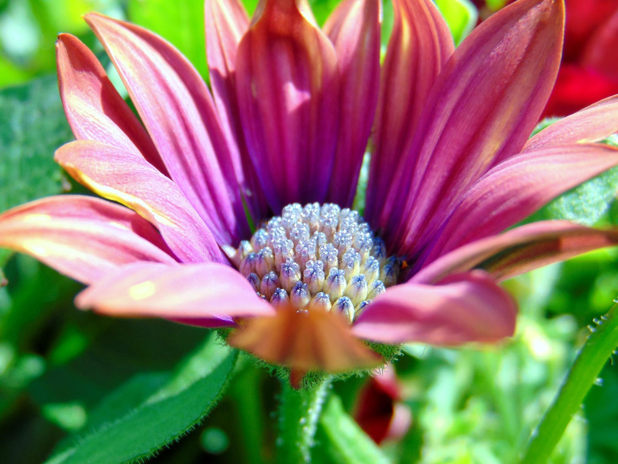 Diamond filled Flower. by jackie.smallwood1