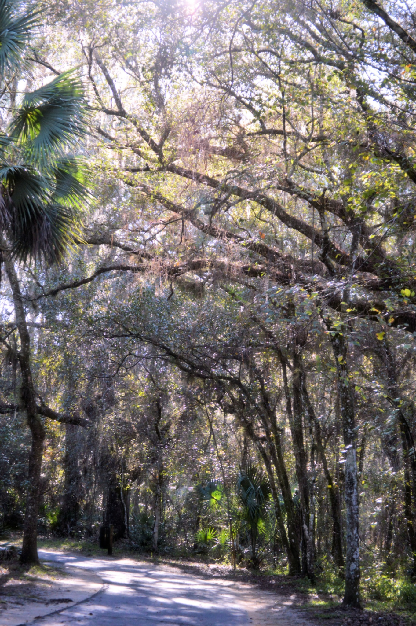 Daily Trail by Jennifer Asher