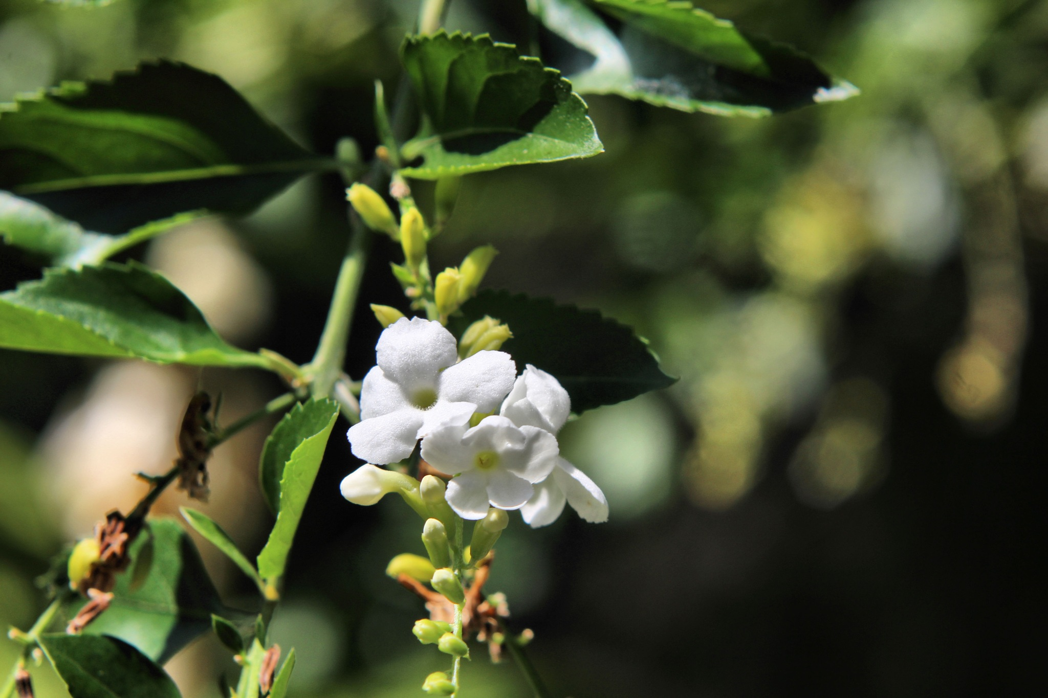 Flower in white by Jennifer Asher