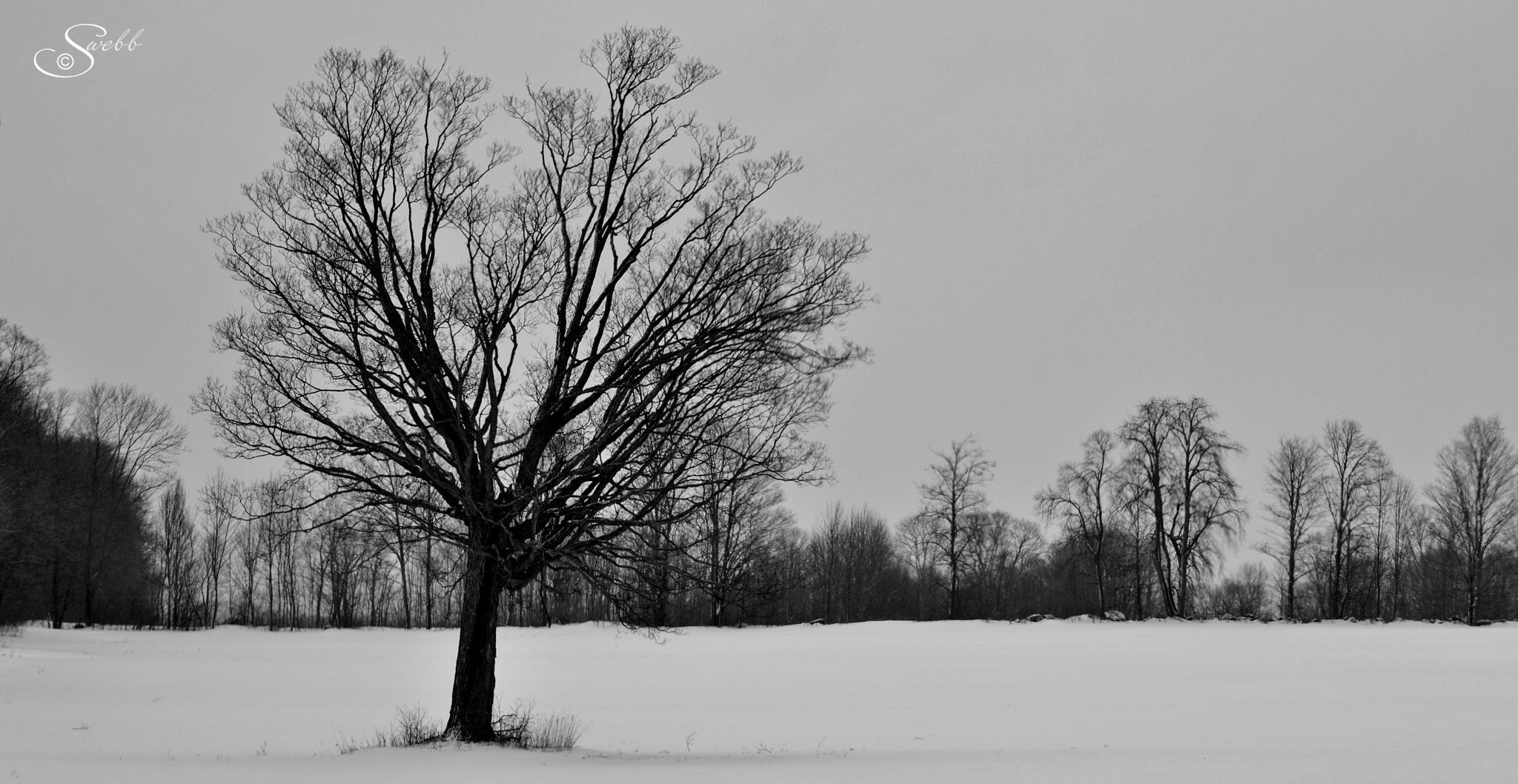Winter by Steve Webb
