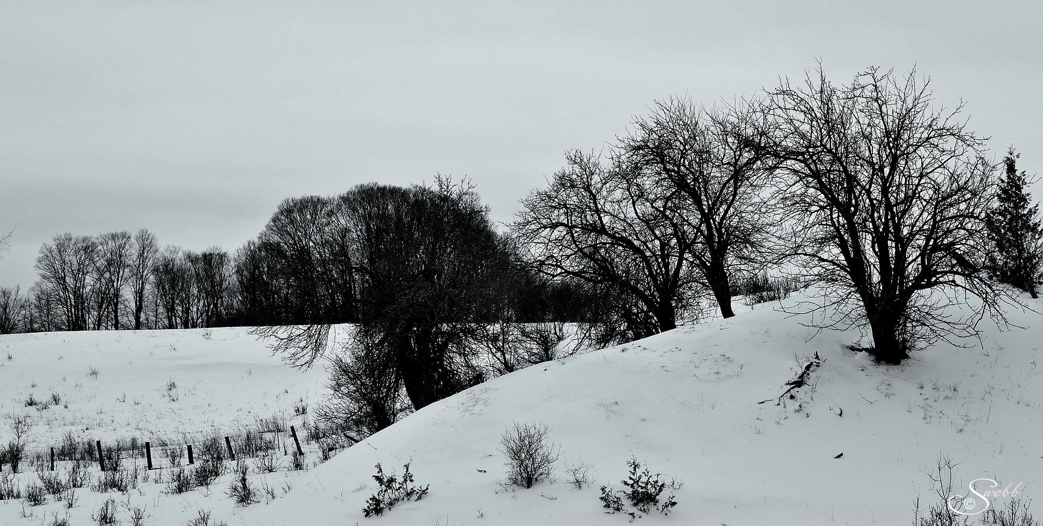 Photo in Random #monochrome #winter #snow #rural #b&w #trees