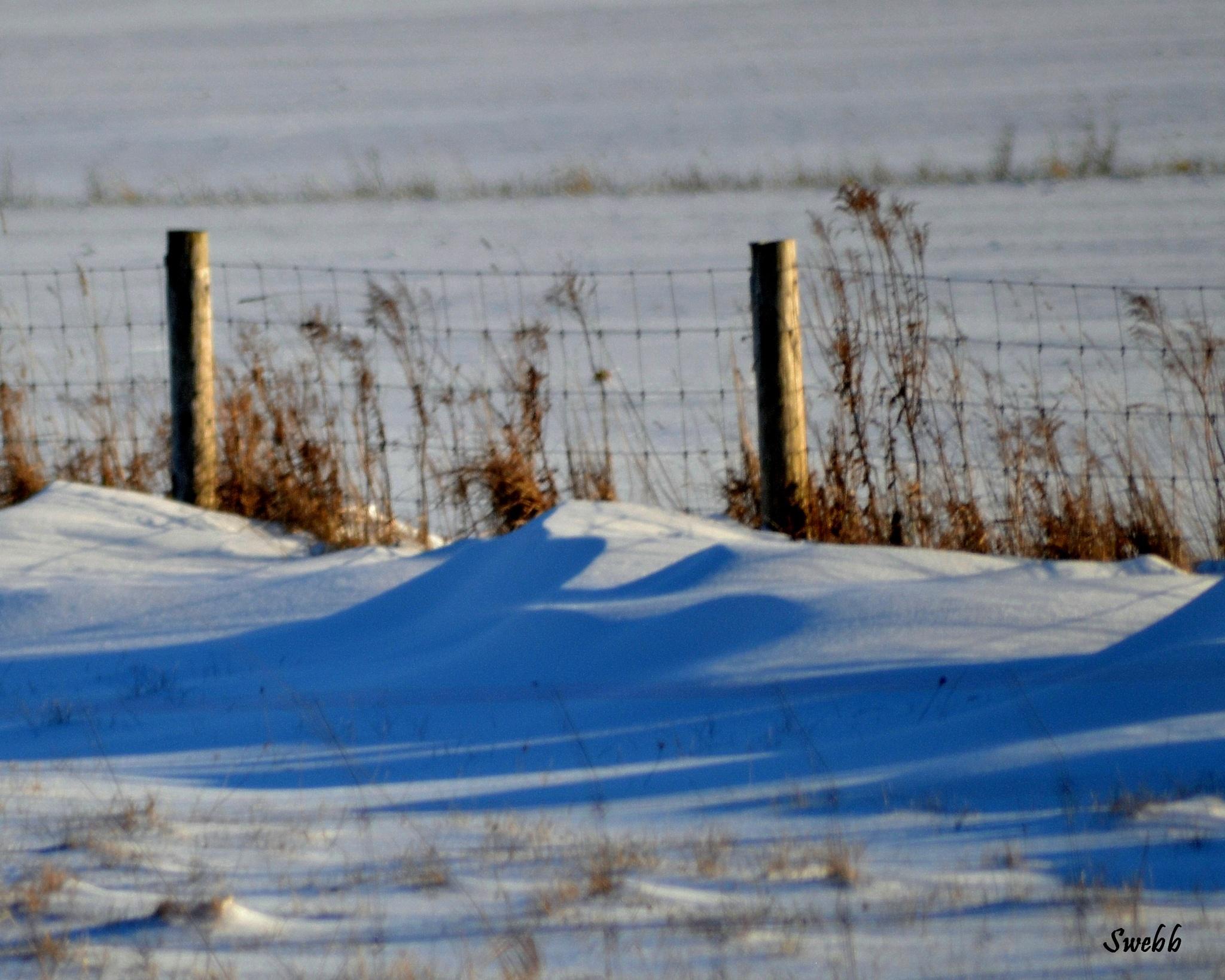 Winter Shadows by Steve Webb