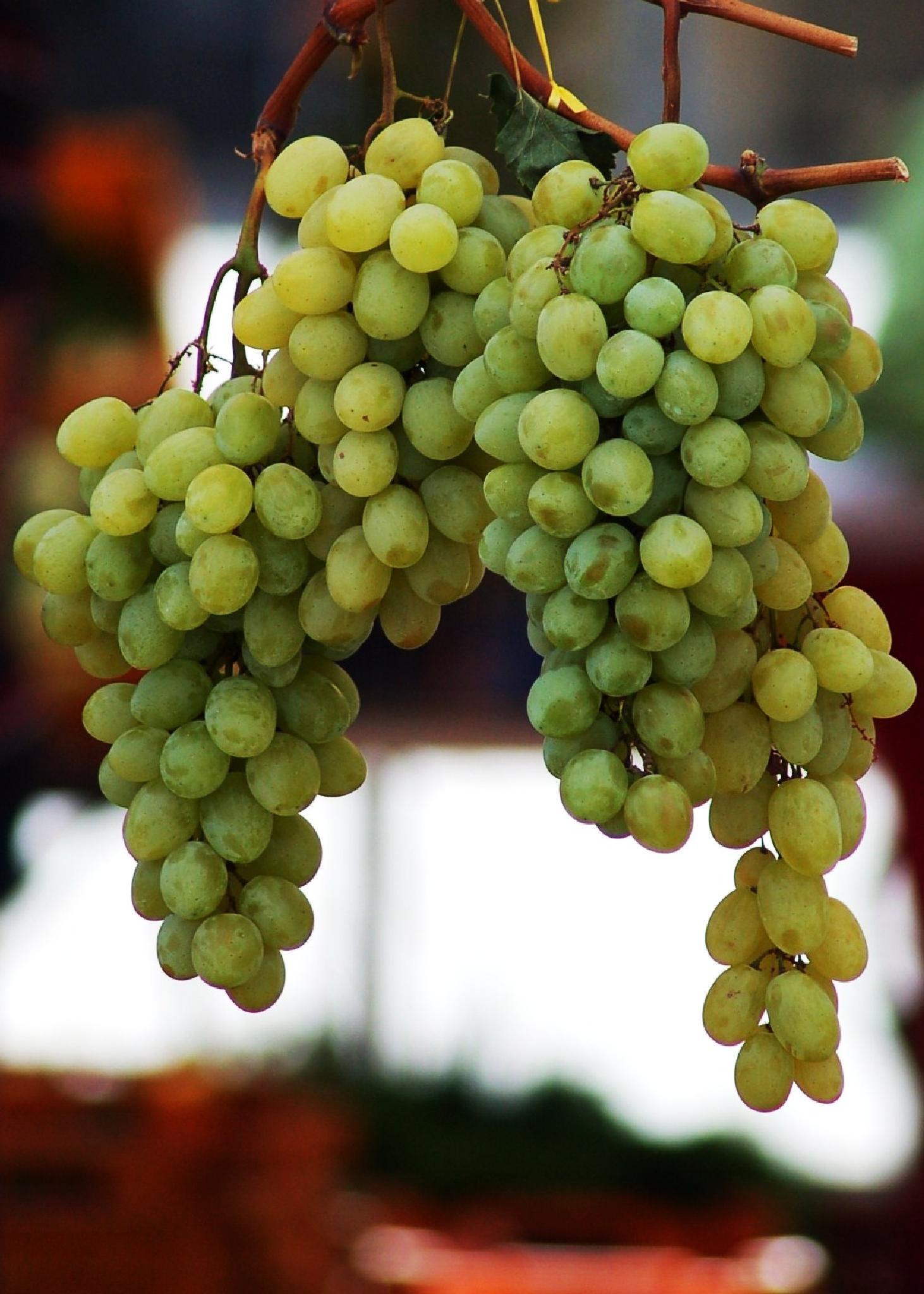 Grapes by Steve Webb