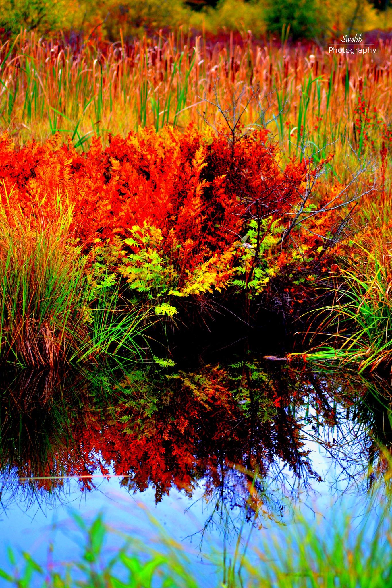 Autumn Reflection by Steve Webb