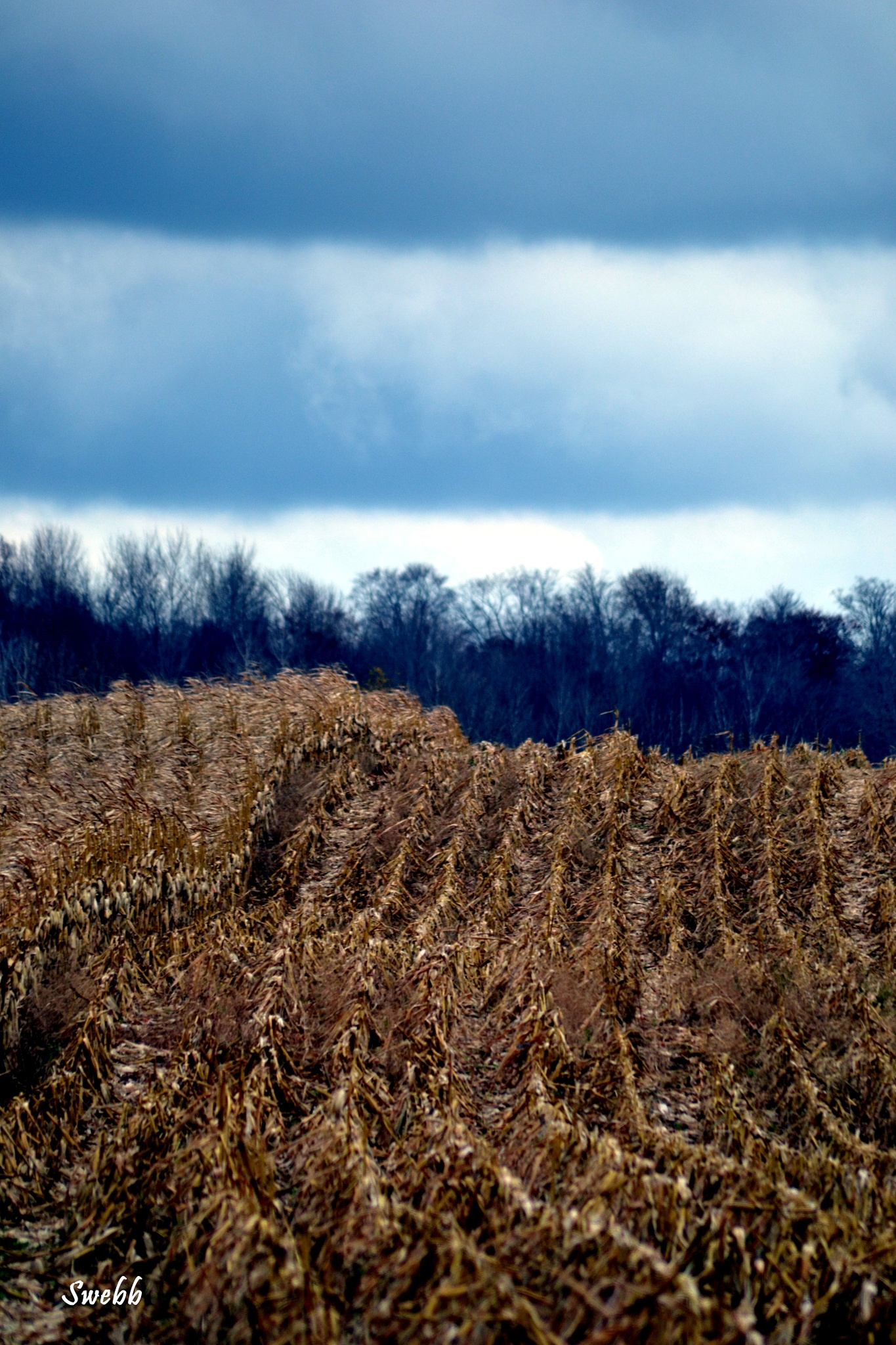 Corn Stalks & Clouds by Steve Webb