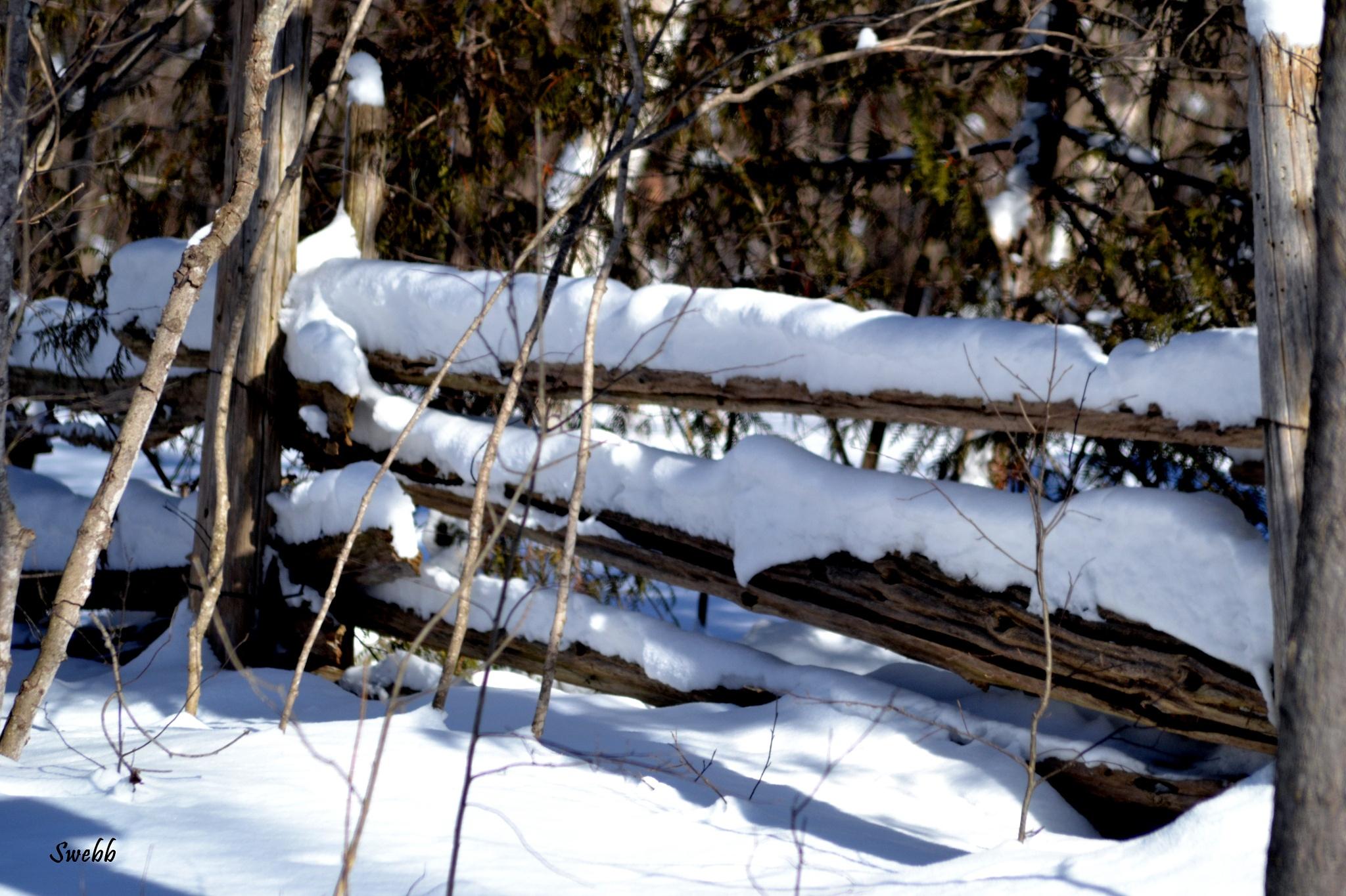 Snow Fence by Steve Webb