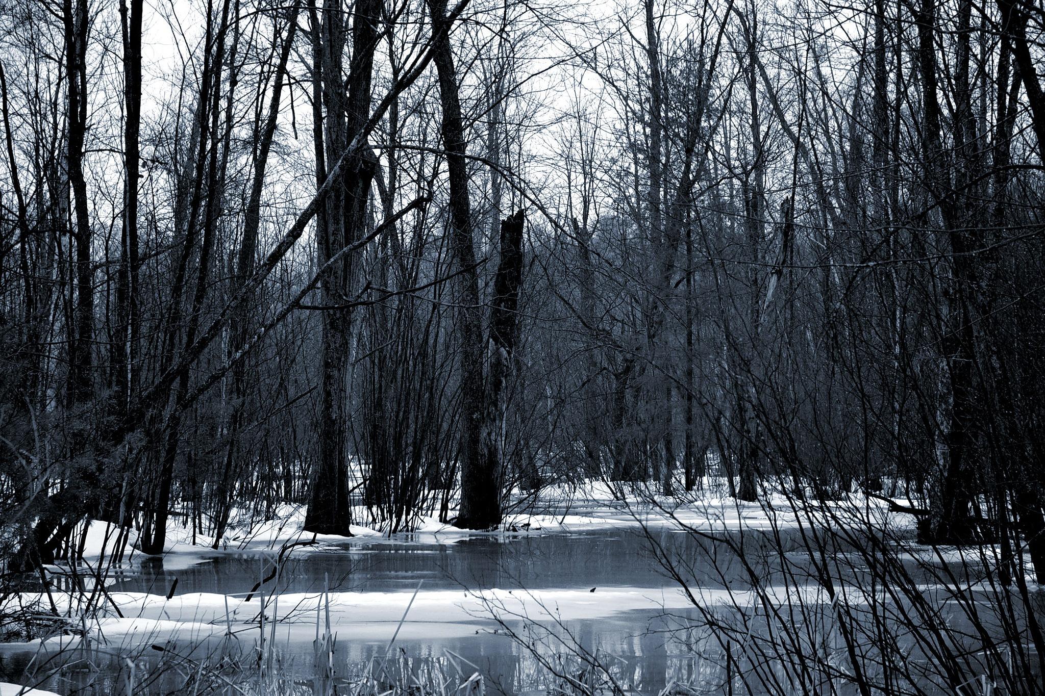 Swamp by Steve Webb