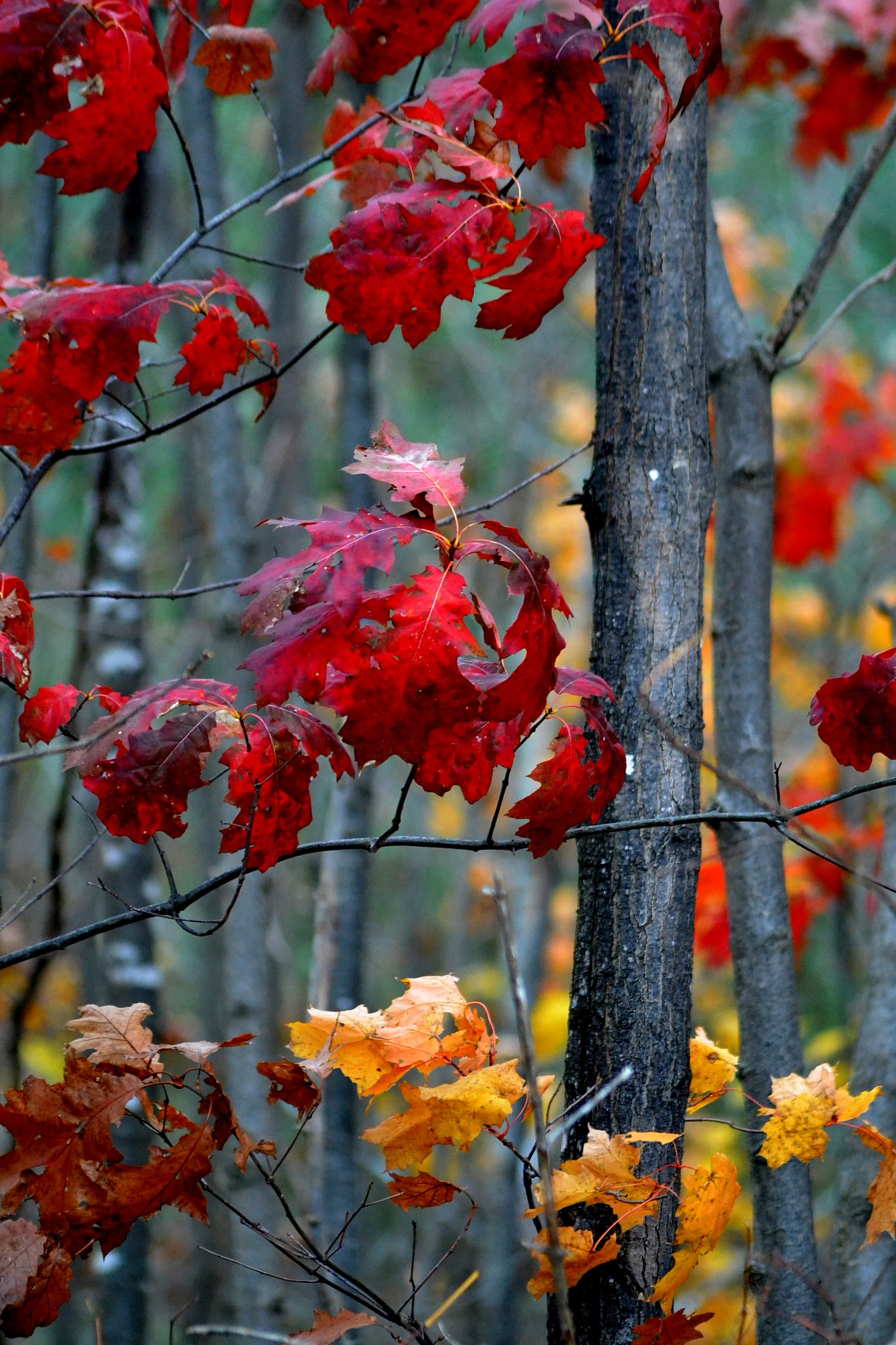 Red & Yellow by Steve Webb