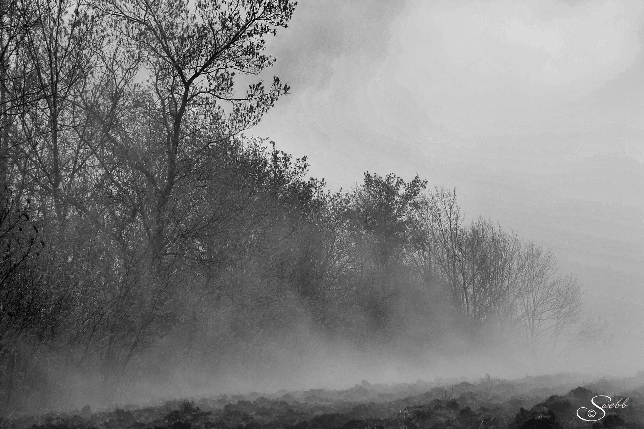 Rolling Fog by Steve Webb