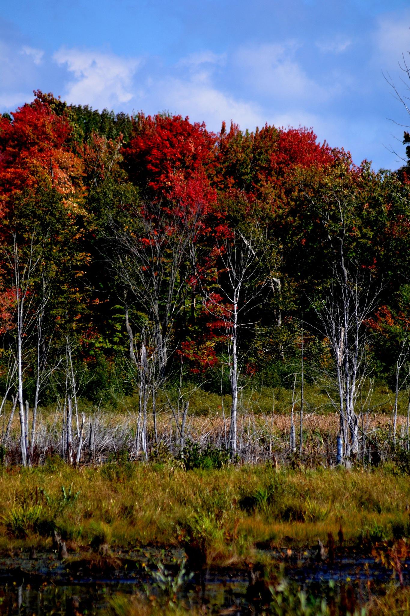Fall  by Steve Webb