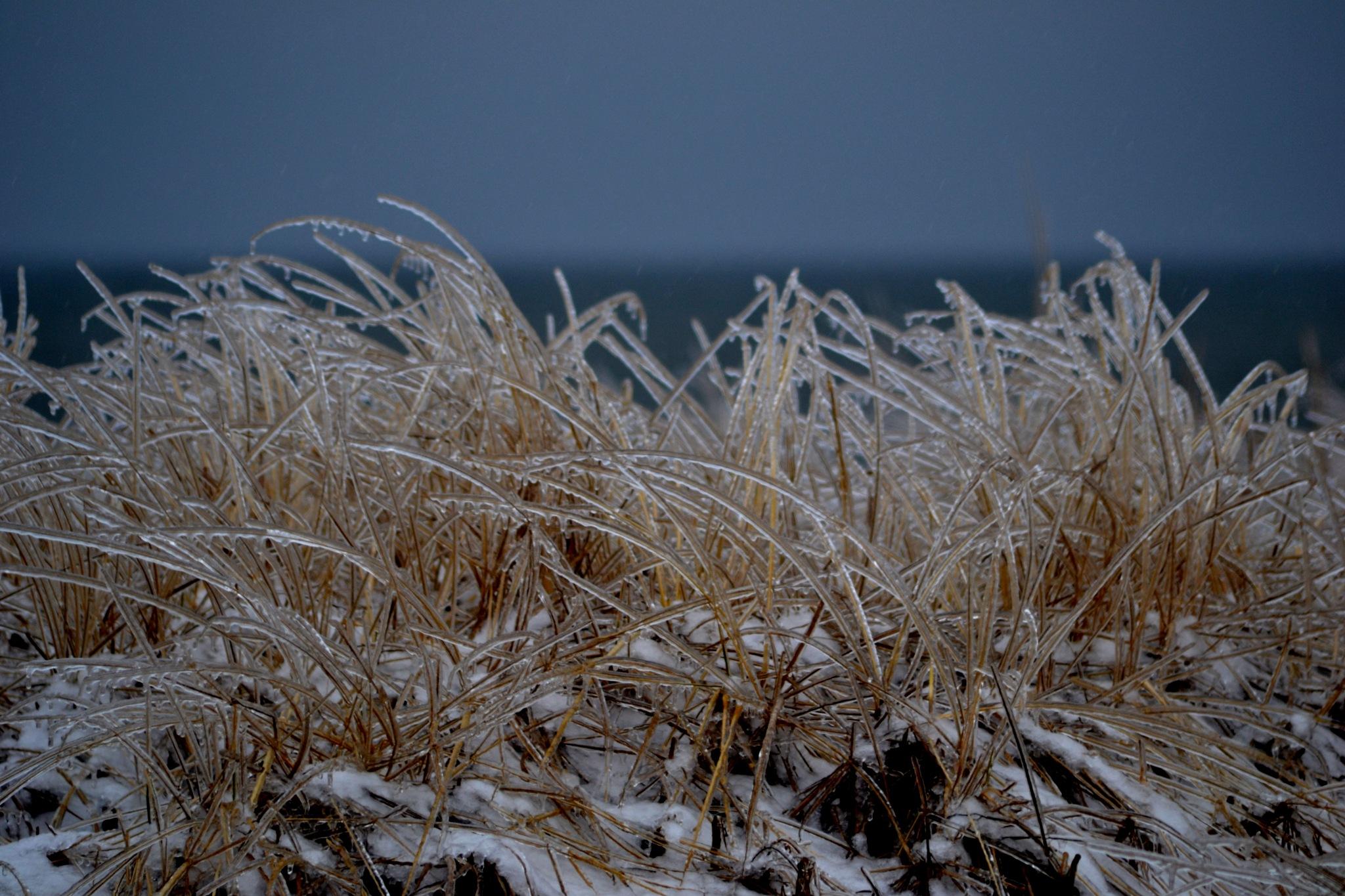 Iced by Steve Webb