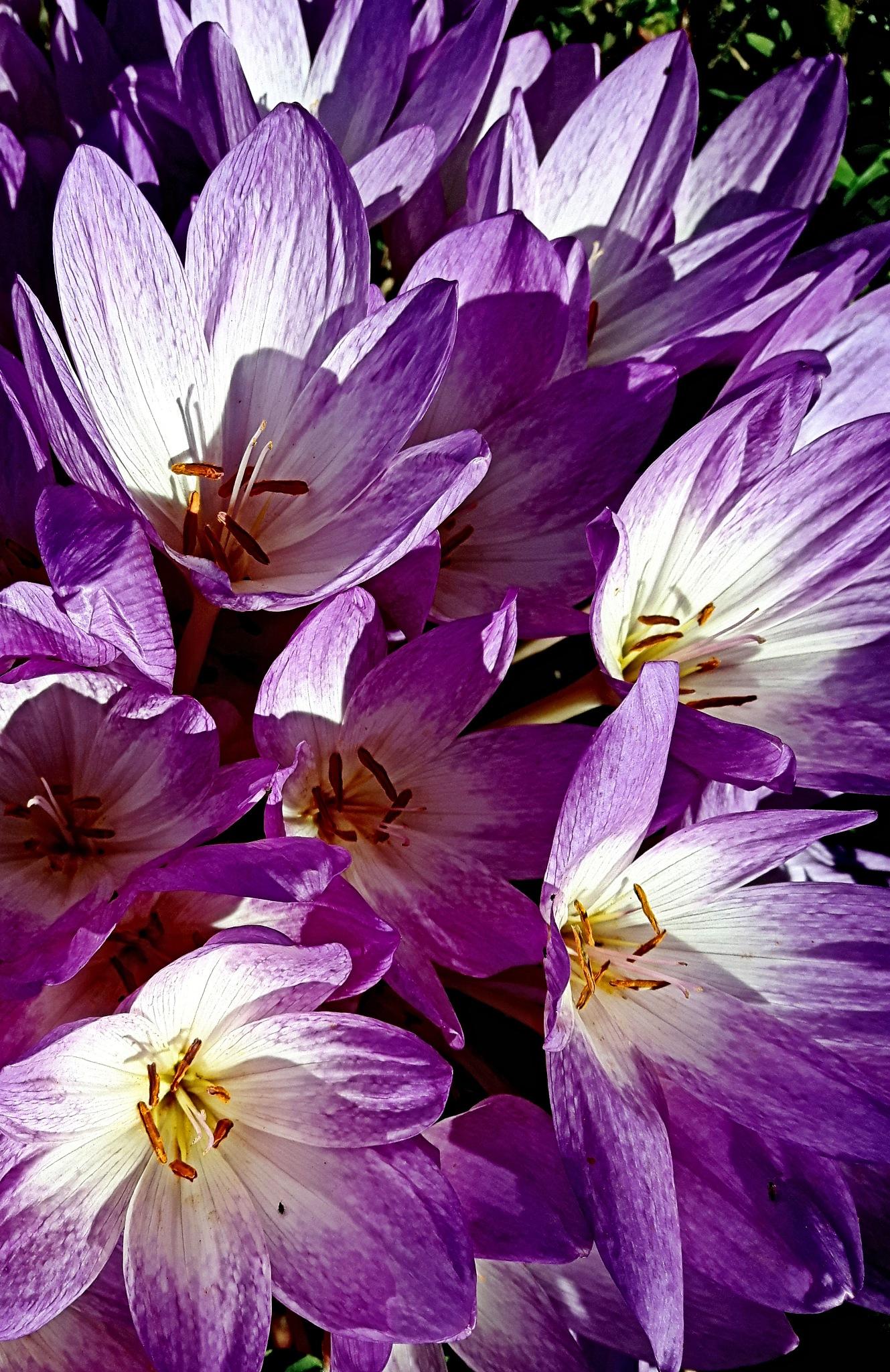 Late Bloom by Steve Webb