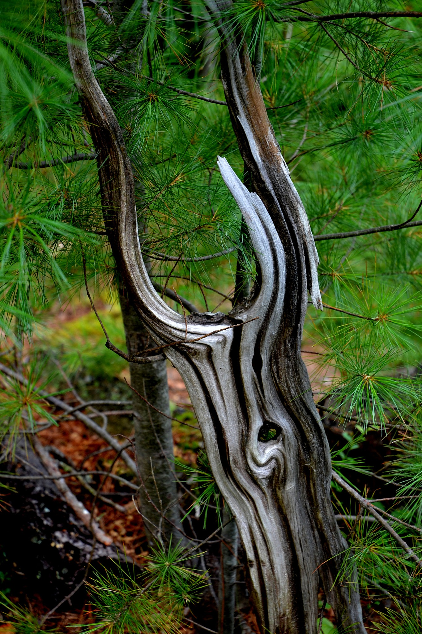 Driftwood by Steve Webb