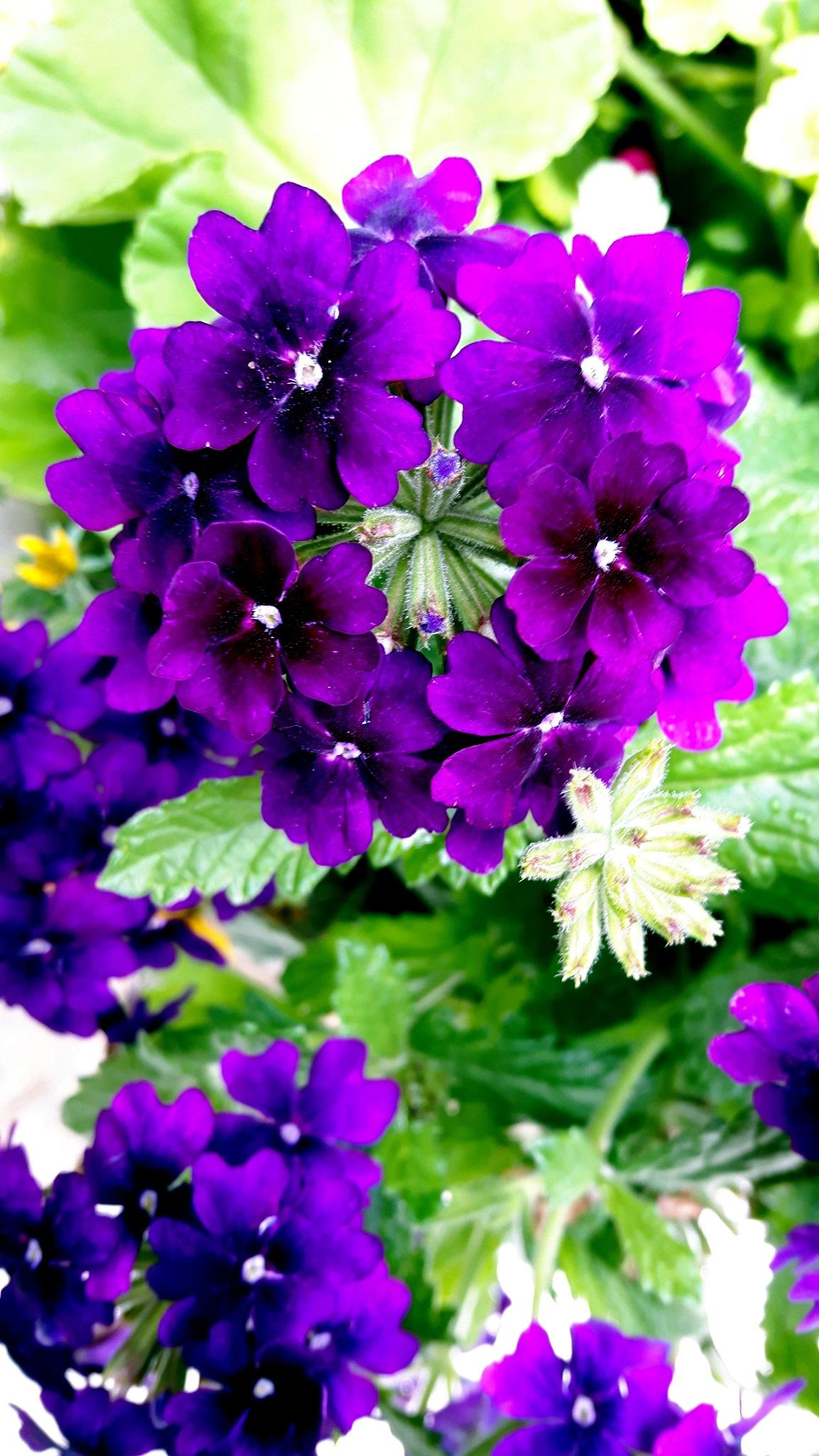 Purple by Steve Webb