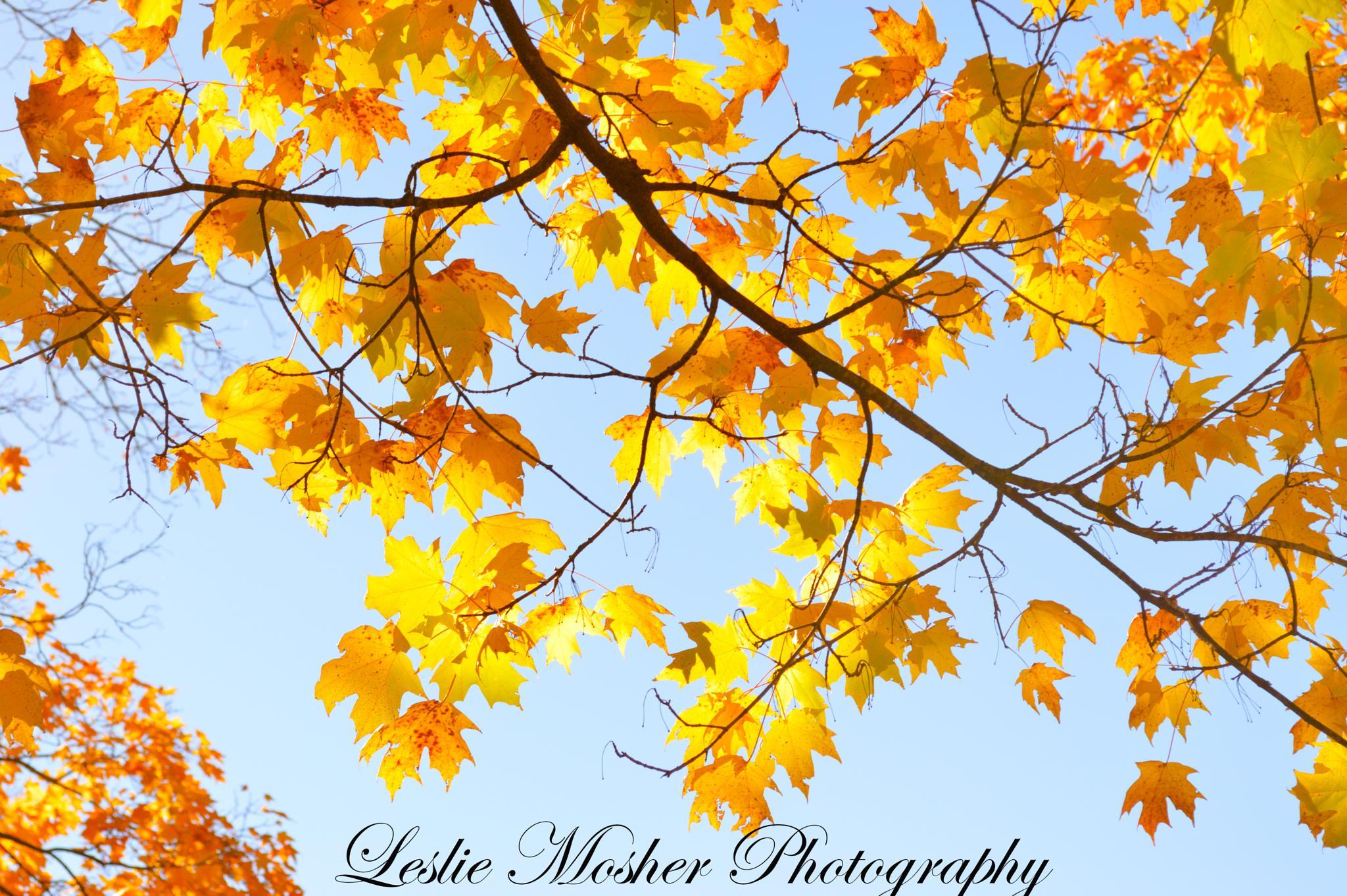 Untitled by Leslie Mosher