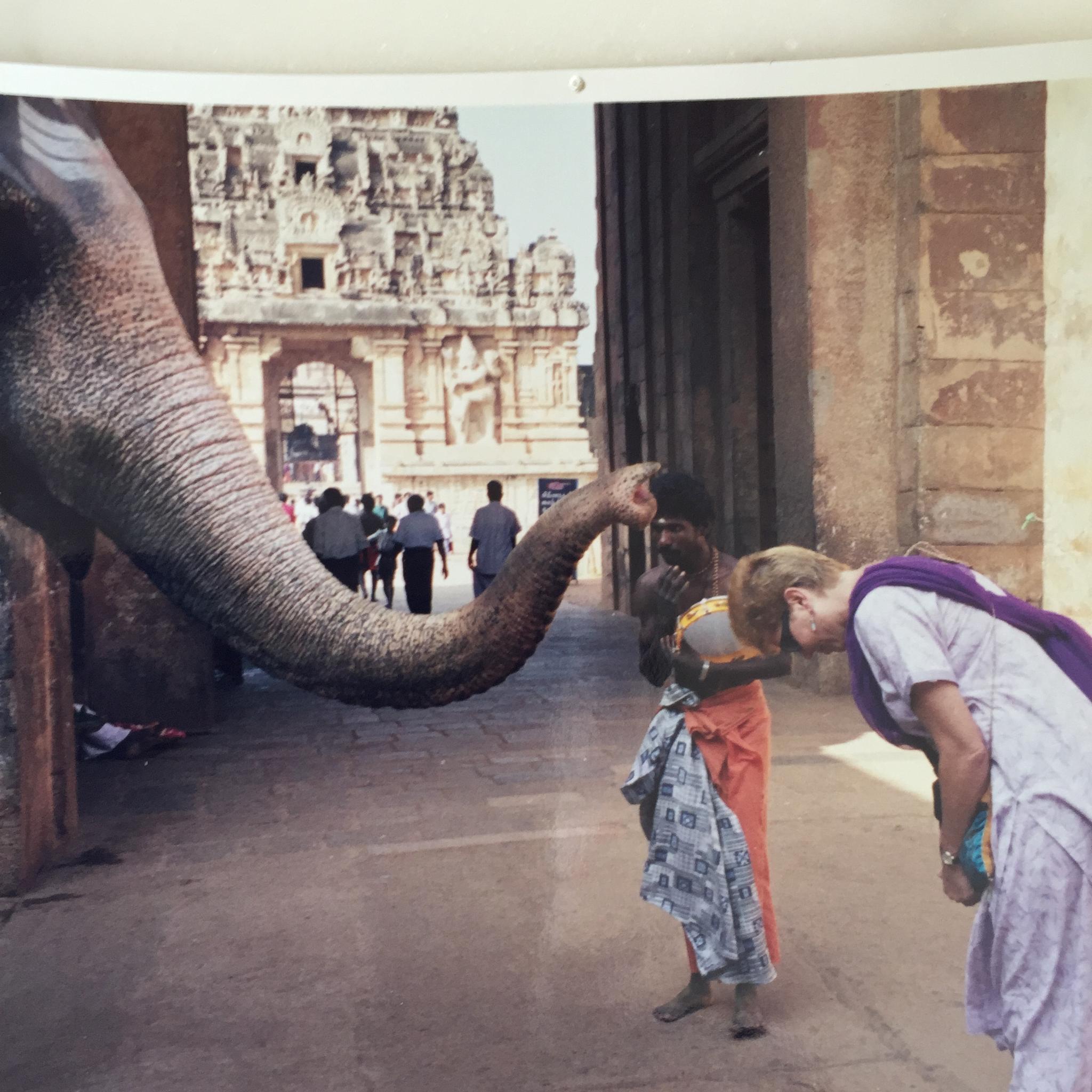 Temple Elephant blessing Asha  by seshac