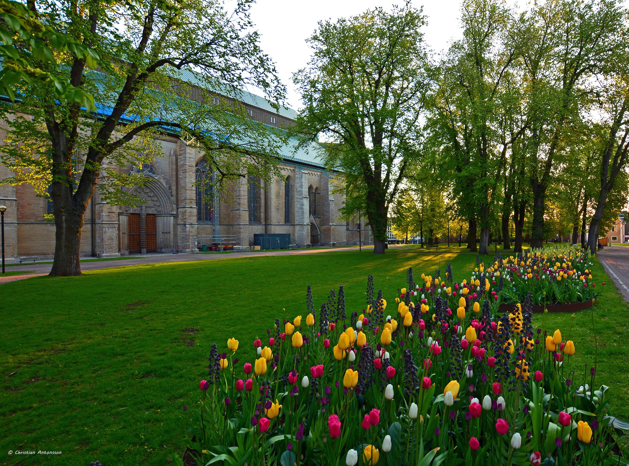 The cathedral in Linköping. Cathedral Park. by christian.antonsson