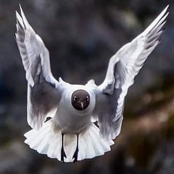 Angel by Knut Sørli