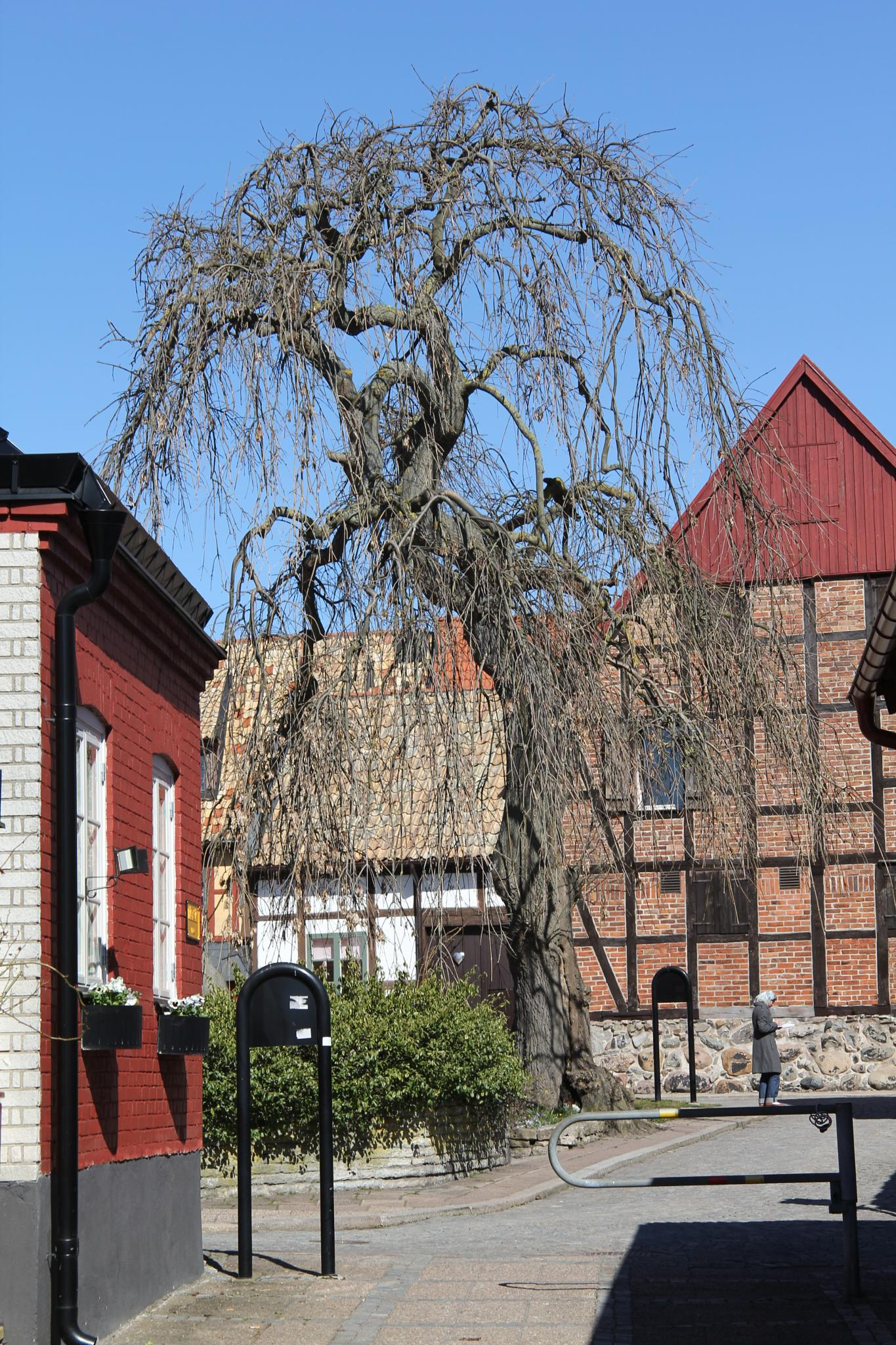 Runnerströms place in Ystad by Anders Weinberg